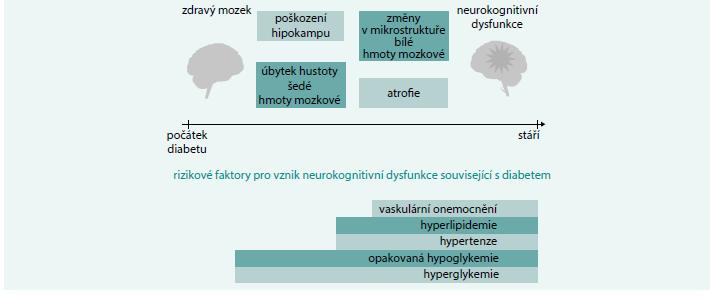 Schéma 1. Změny mozkové tkáně v průběhu diabetes mellitus