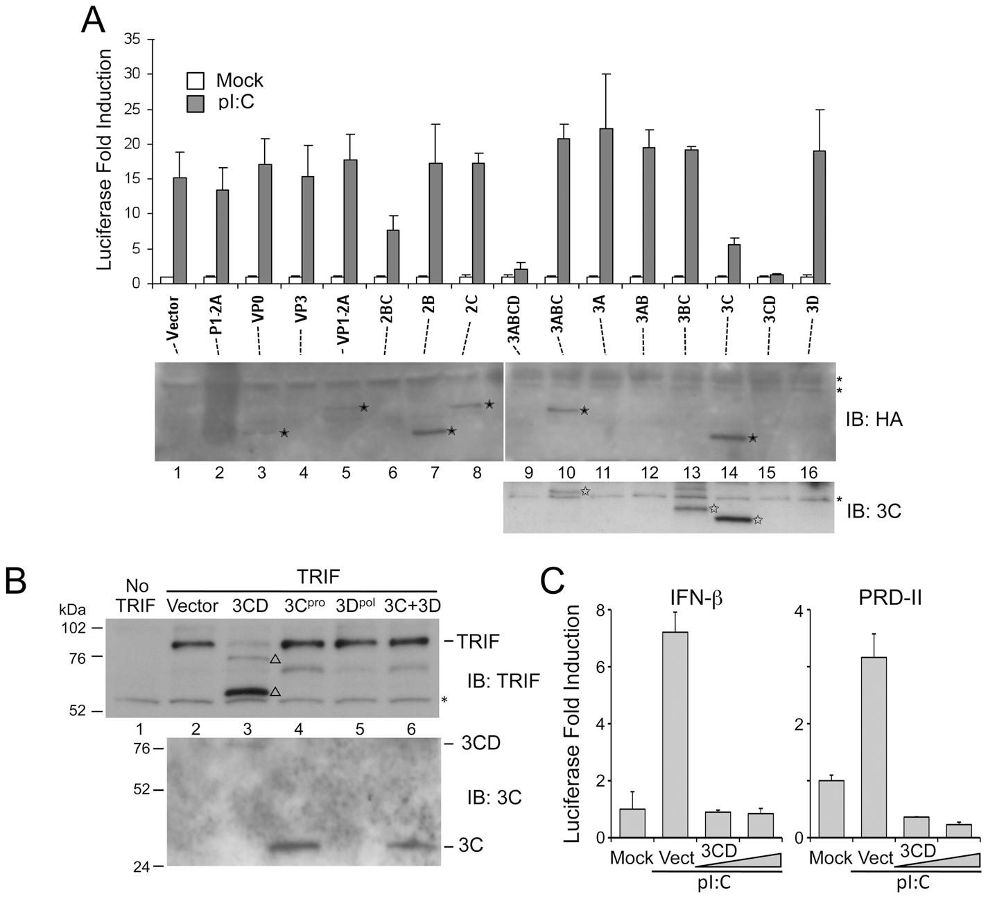 The HAV 3CD protease-polymerase precursor disrupts TLR3 signaling through cleavage of TRIF.
