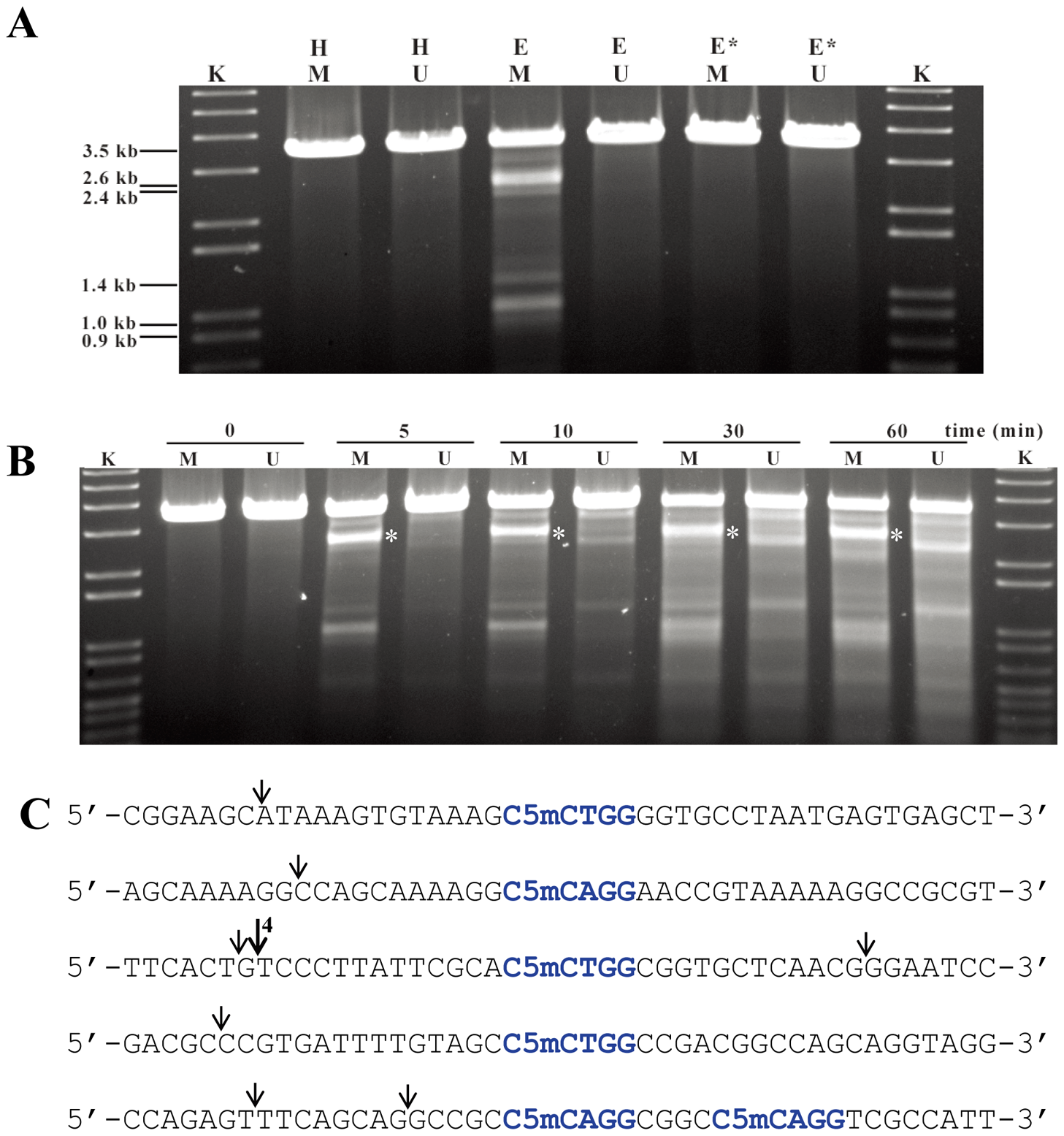 Sco4631-mediated <i>in vitro</i> cleavage of Dcm-methylated plasmid DNA.