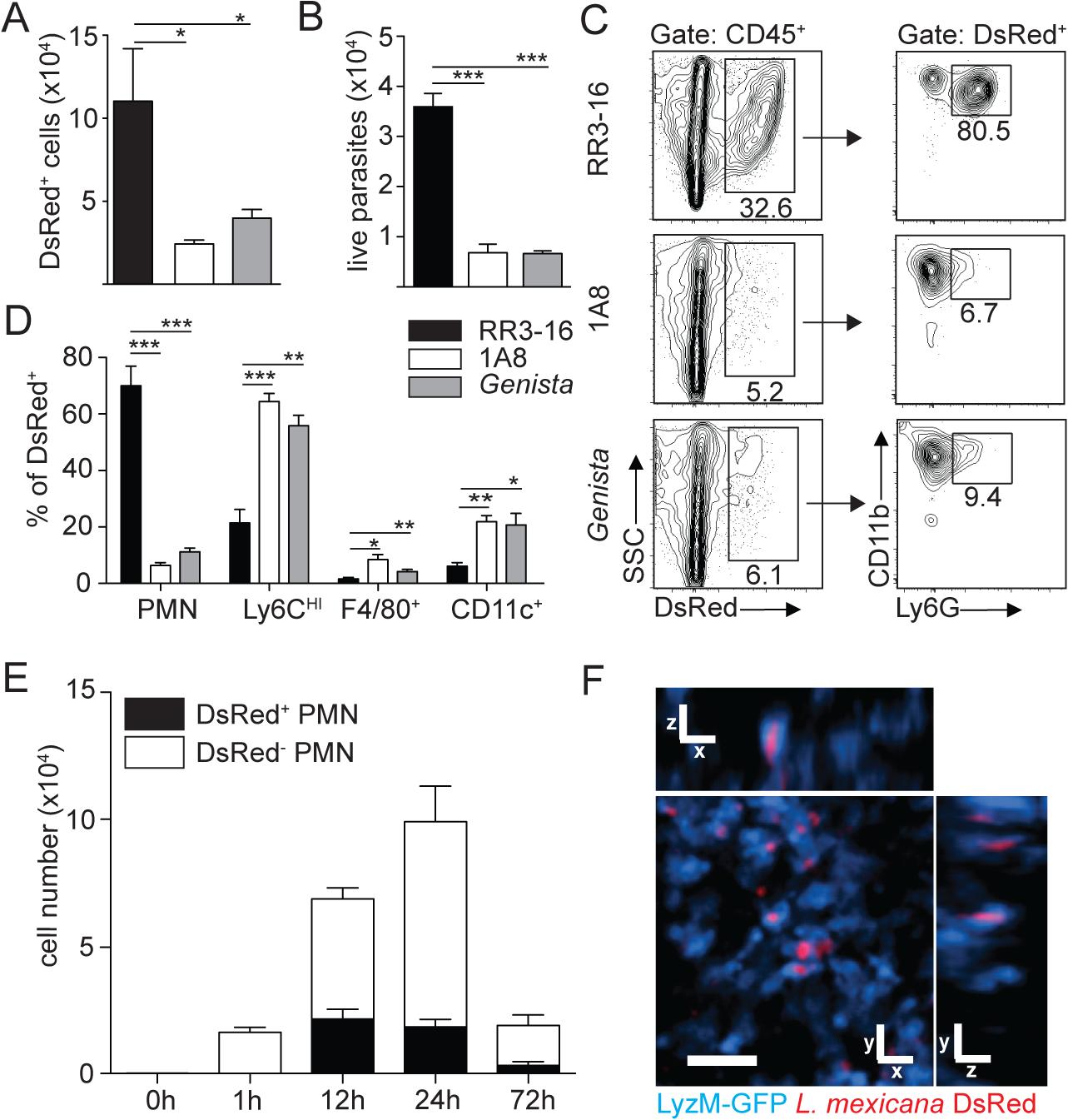 Sequestration of <i>L</i>. <i>mexicana</i> promastigotes by neutrophils impacts on early parasite control.