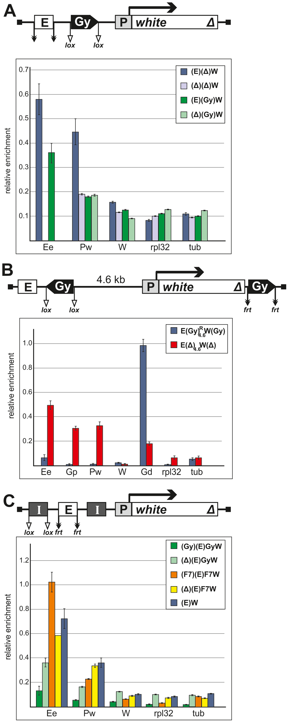 Binding of Zeste to the <i>white</i> enhancer, promoter, and coding region in the transgenic constructs.