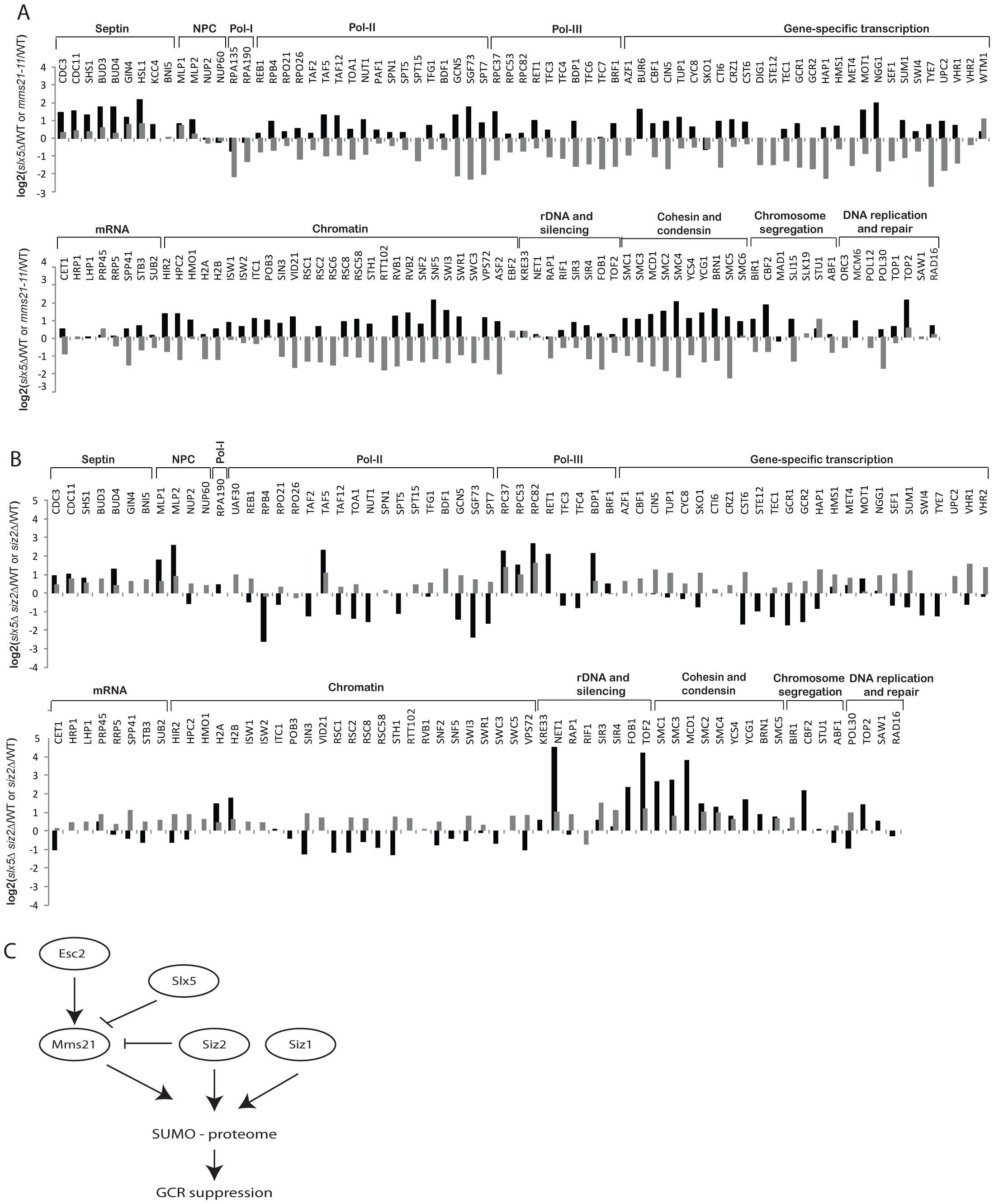 Effect of <i>slx5Δ</i> on the sumoylation of SUMO targets.