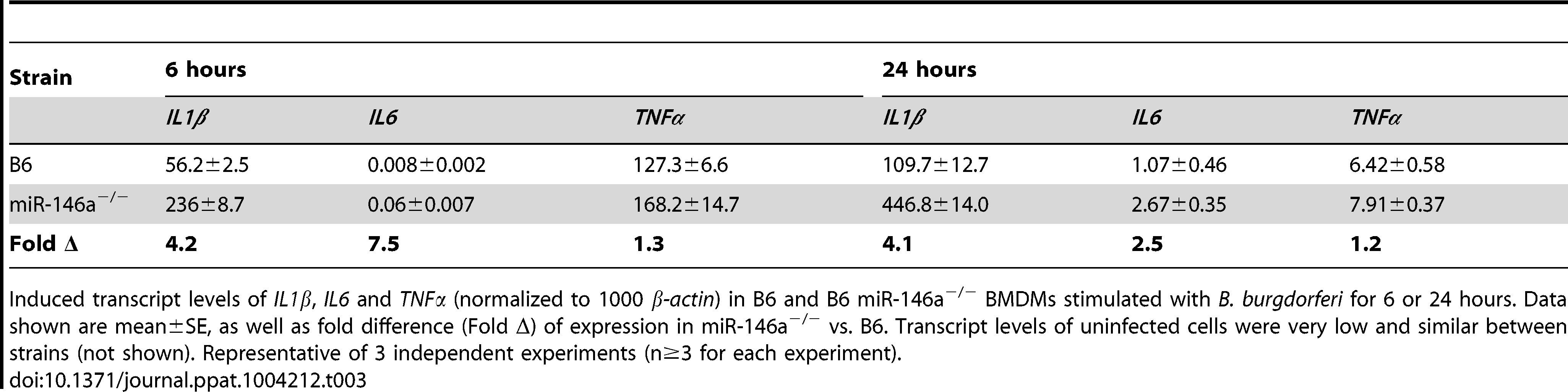 mRNA expression of induced cytokines in BMDMs from B6 and B6 miR-146a<sup>−/−</sup> mice after 6 and 24 hours stimulation with <i>B. burgdorferi</i>.
