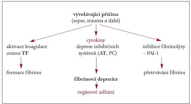 Schéma 1. Etiopatogeneze DIC.