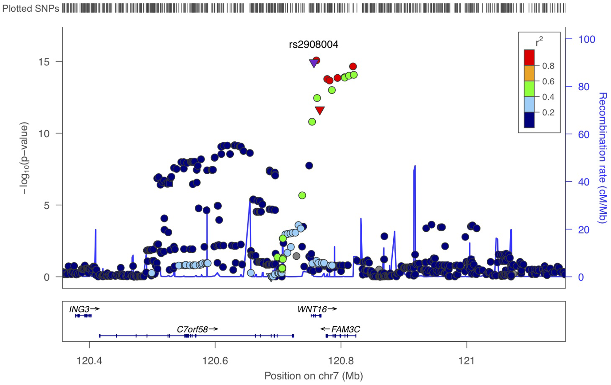 Scatter plots of the observed association of 7q31 locus with forearm BMD.