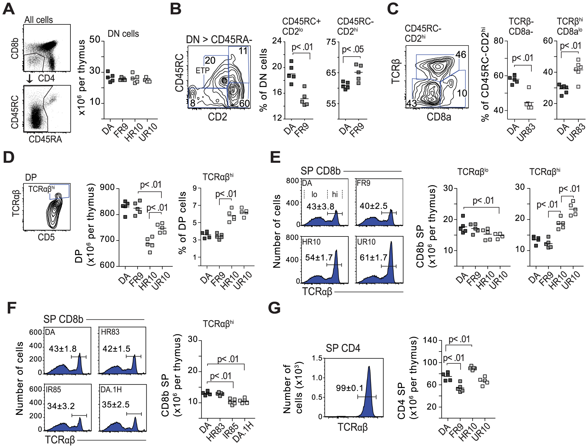 Class-I modification reduces negative selection of CD8 cells.