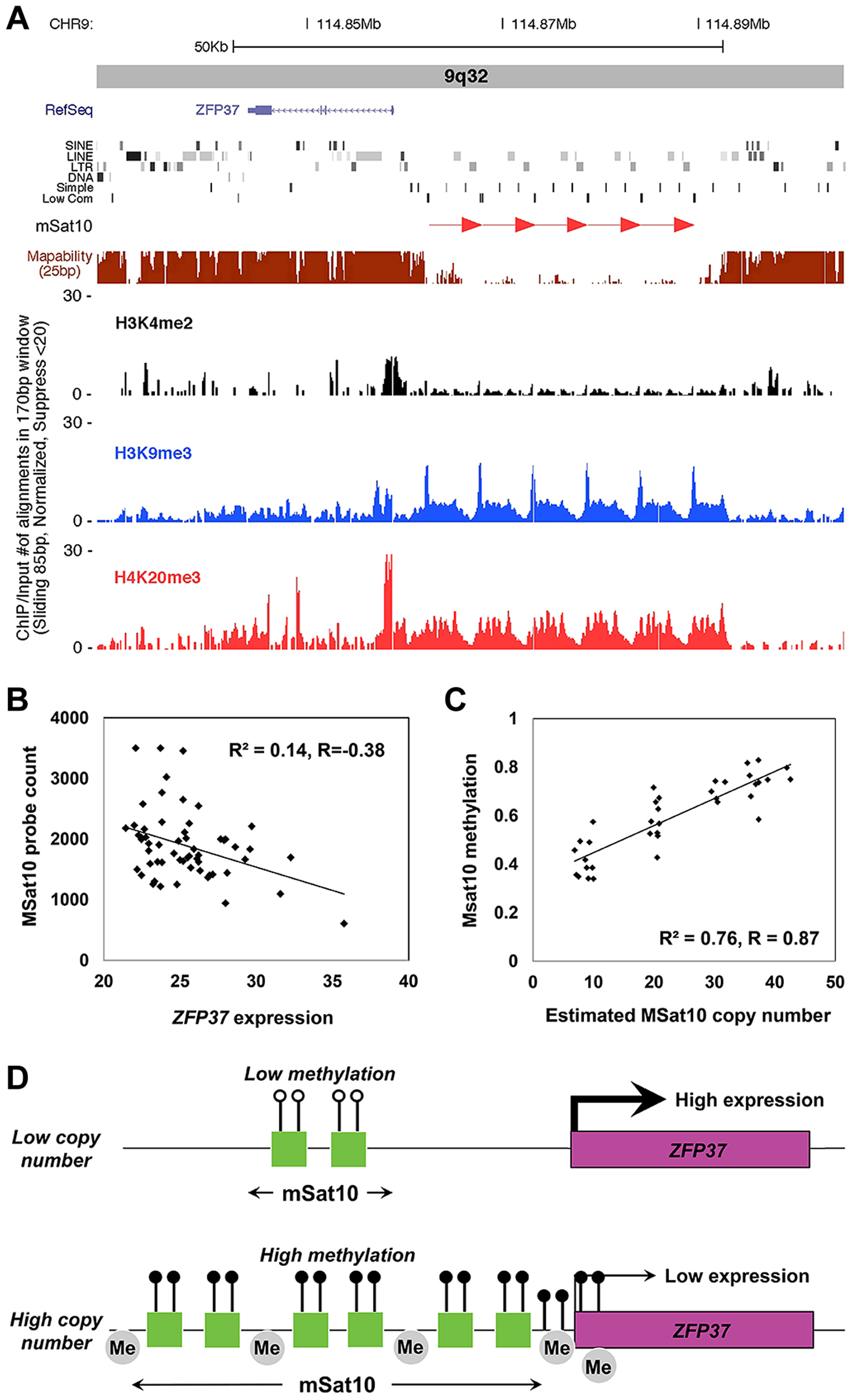 Association of MSat10 copy number with neighboring gene expression and epigenetic marks.