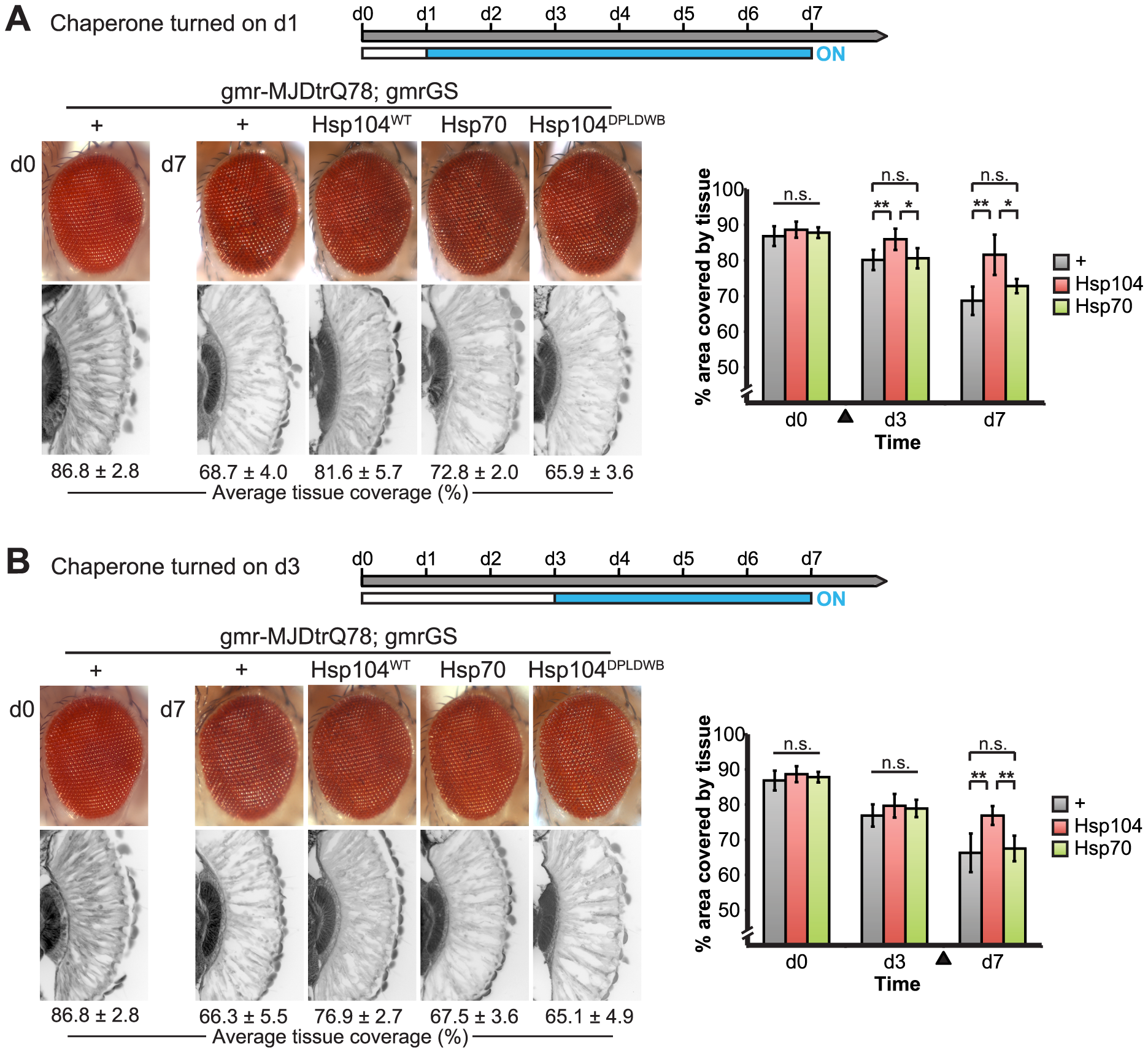 Progressive MJDtrQ78 pathogenicity can be suppressed by expression of Hsp104 after onset of degeneration.