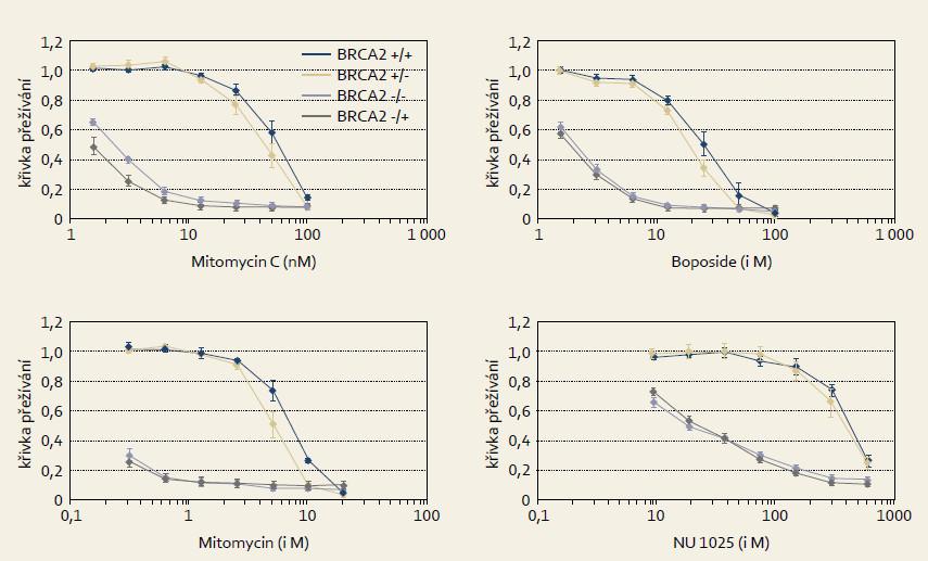 Selektivní citlivost experimentálních nádorových BRCA2 deficitních buněk k látkám poškozujícím DNA jako mitomycinu C, melfalanu, etopozidu či k PARP inhibitorům (NU 1025). Modifikováno dle Hucl et al [11].  Fig. 5. Selective sensitivity of experimental BRCA2 deficient cancer cells to DNA damaging agents such as mitomycin C, melphalan, etoposide or PARP inhibitors (NU 1025). Modified from Hucl et al [11].