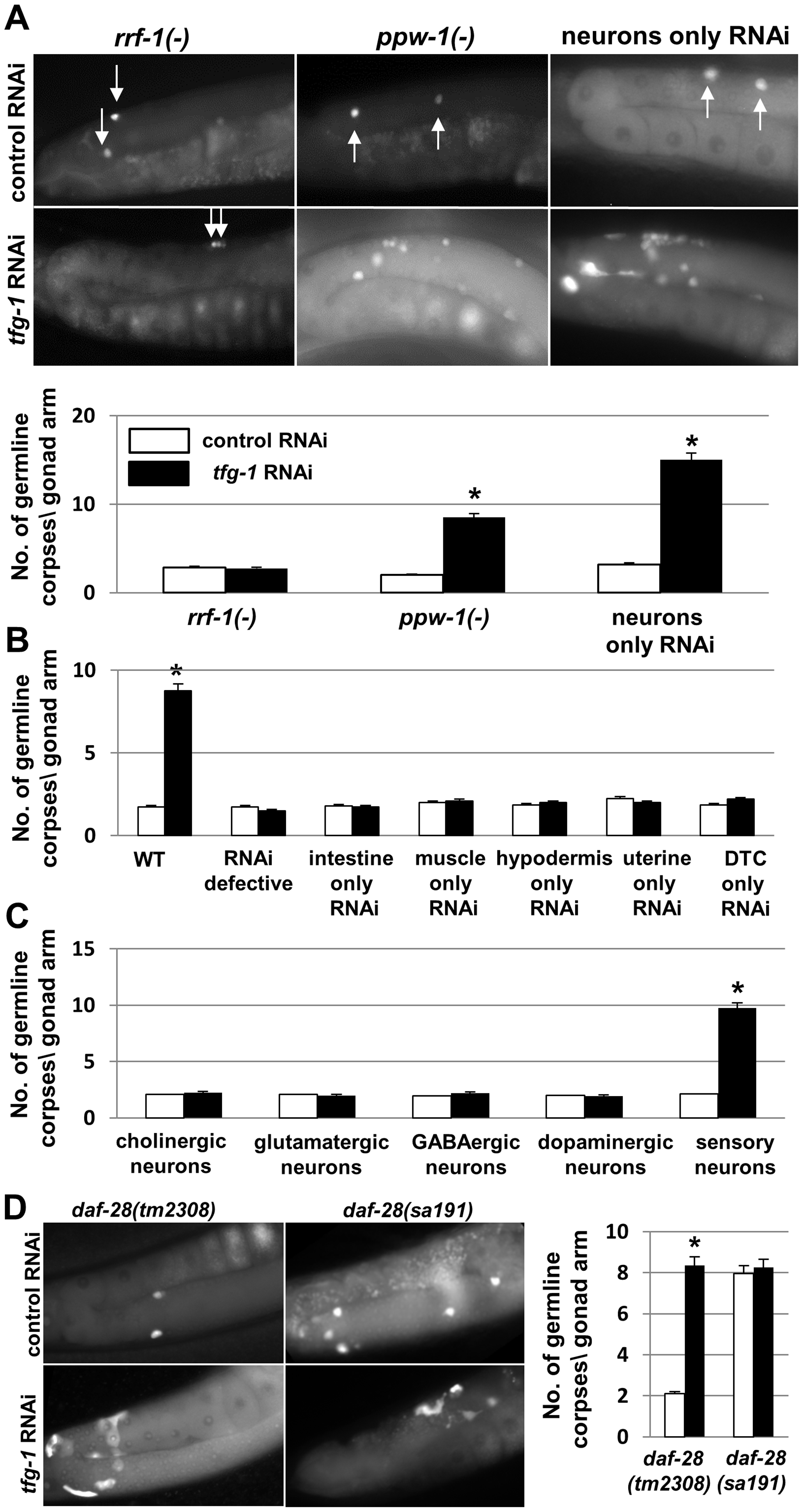 ER stress specifically in sensory neurons is sufficient to induce germline apoptosis.