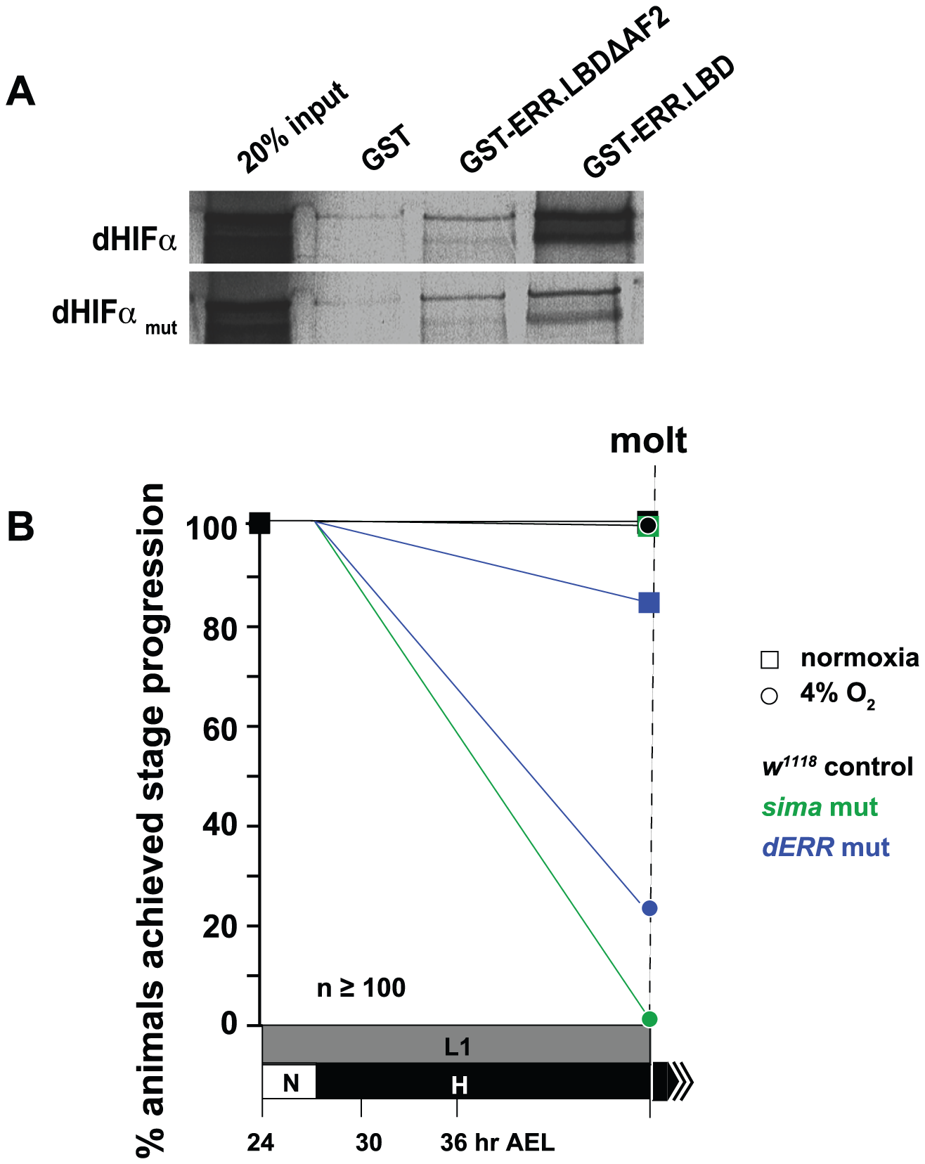 dERR binds to dHIFa and is essential for hypoxic survival.