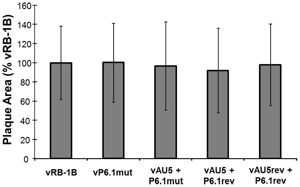<i>In vitro</i> replication of parental, mutant, and revertant viruses.