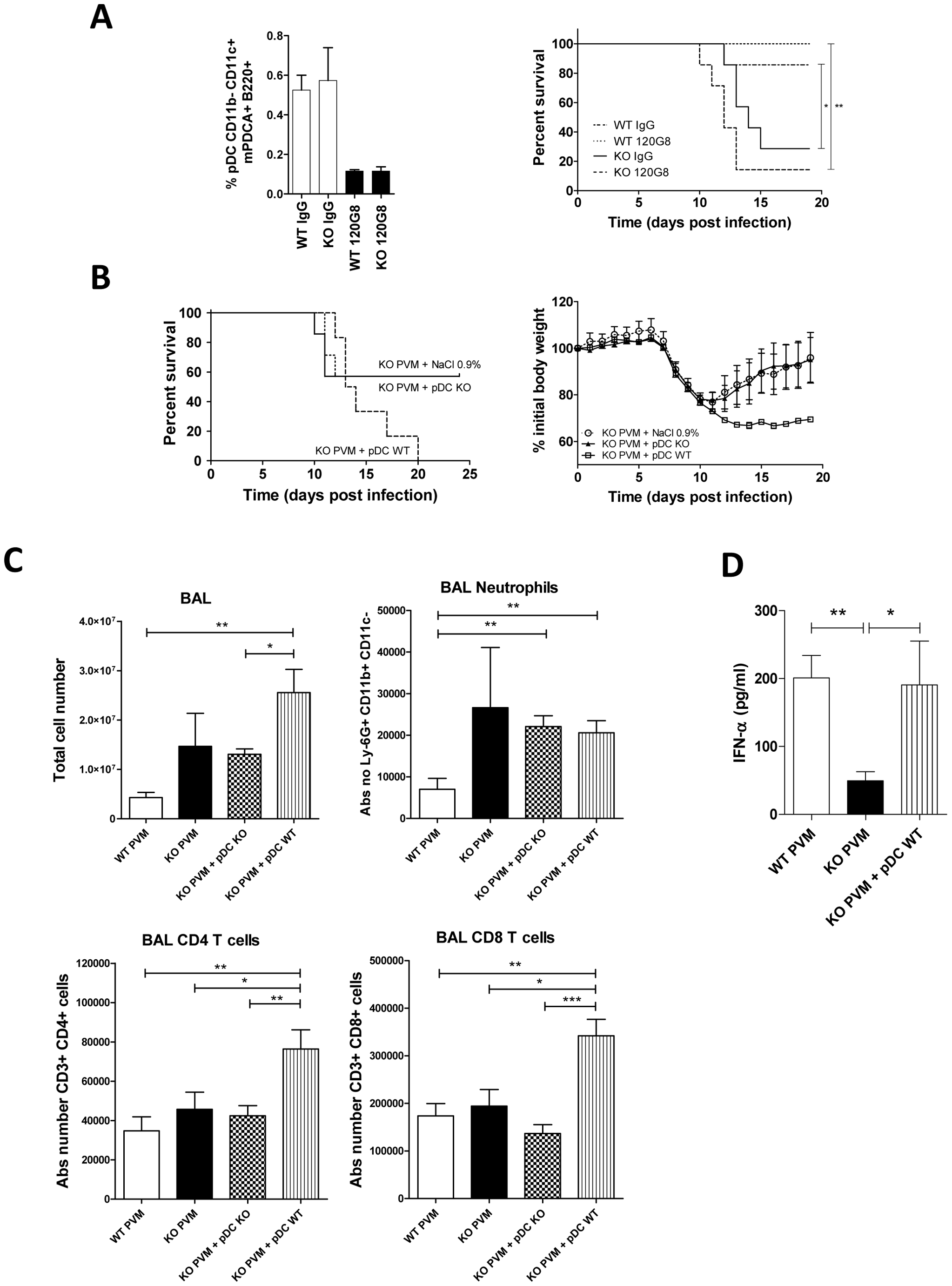 Increased pathogenicity of PVM in ChemR23<sup>−/−</sup> mice is not due to the defective pDC recruitment.