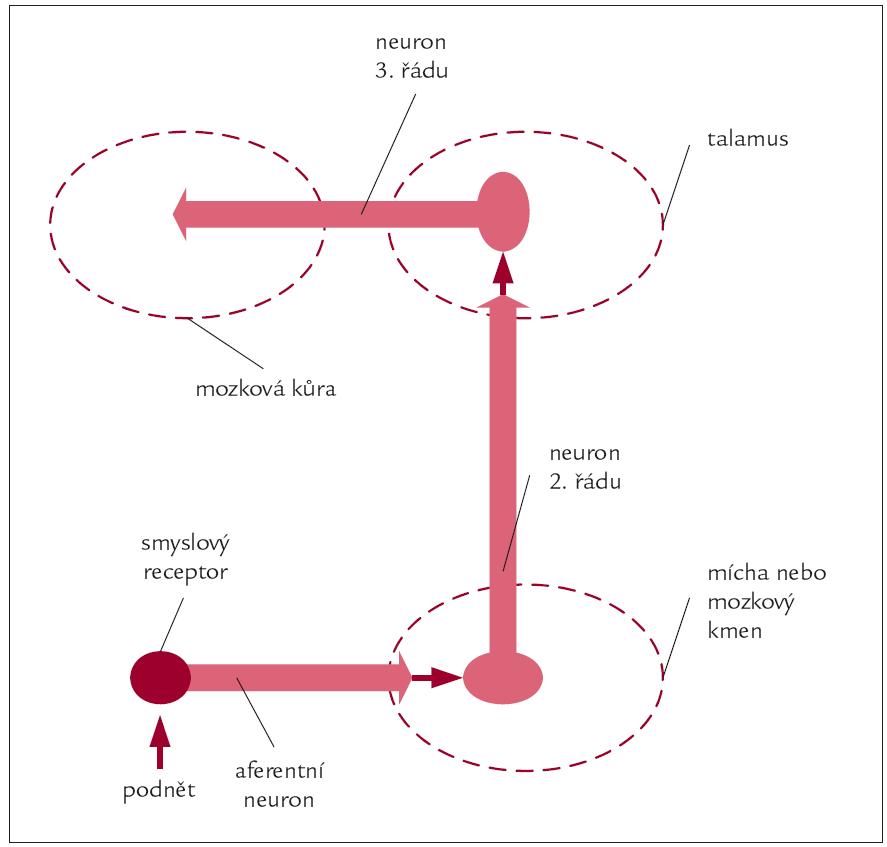 Schéma 2. Obecné schéma centripetálního přenosu informace v nervovém systému