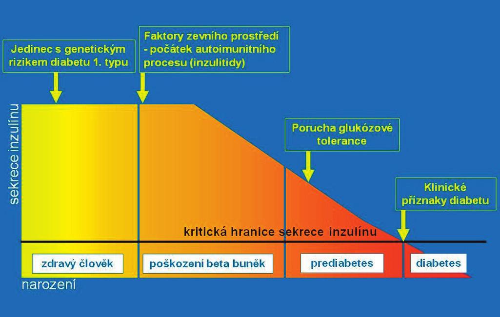 Přirozený průběh autoimunitní inzulitidy ve schematickém vyjádření. Jedinec se rodí s genetickou predispozicí pro možný vznik diabetu 1. typu. Autoimunitní destrukce beta-buněk (inzulitida) začíná vlivem spouštěcího faktoru ze zevního prostředí. Postupně ubývá masy beta-buněk a klesá celková kapacita sekrece inzulinu. Po určité době lze prokázat pokles sekrece inzulinu (intravenózním glukózovým tolerančním testem), později i poruchu glukózové tolerance (orálním glukózovým tolerančním testem). Toto vyšetření se však zpravidla neprovádí, protože jedinec je asymptomatický. Klesne-li kapacita betabuněk na 10–15 % původního množství, rozvine se trvalá hyperglykémie a klinické příznaky diabetu. Je diagnostikován diabetes a zahájeno léčení (podle Kateřiny Štechové a Lenky Petruželkové).