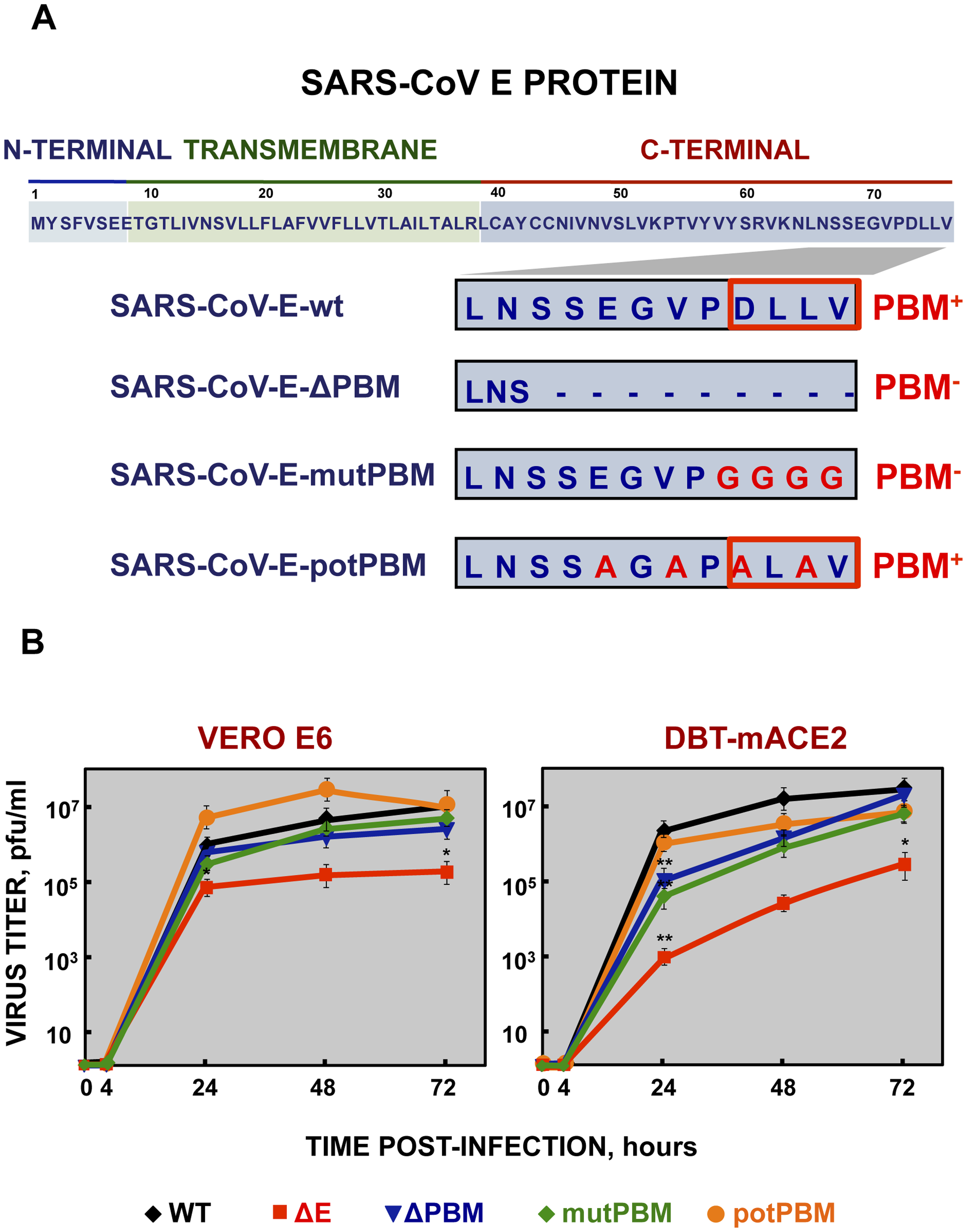 Generation of recombinant SARS-CoVs with E protein PBM truncated or mutated by reverse genetics and growth kinetics in cell culture.