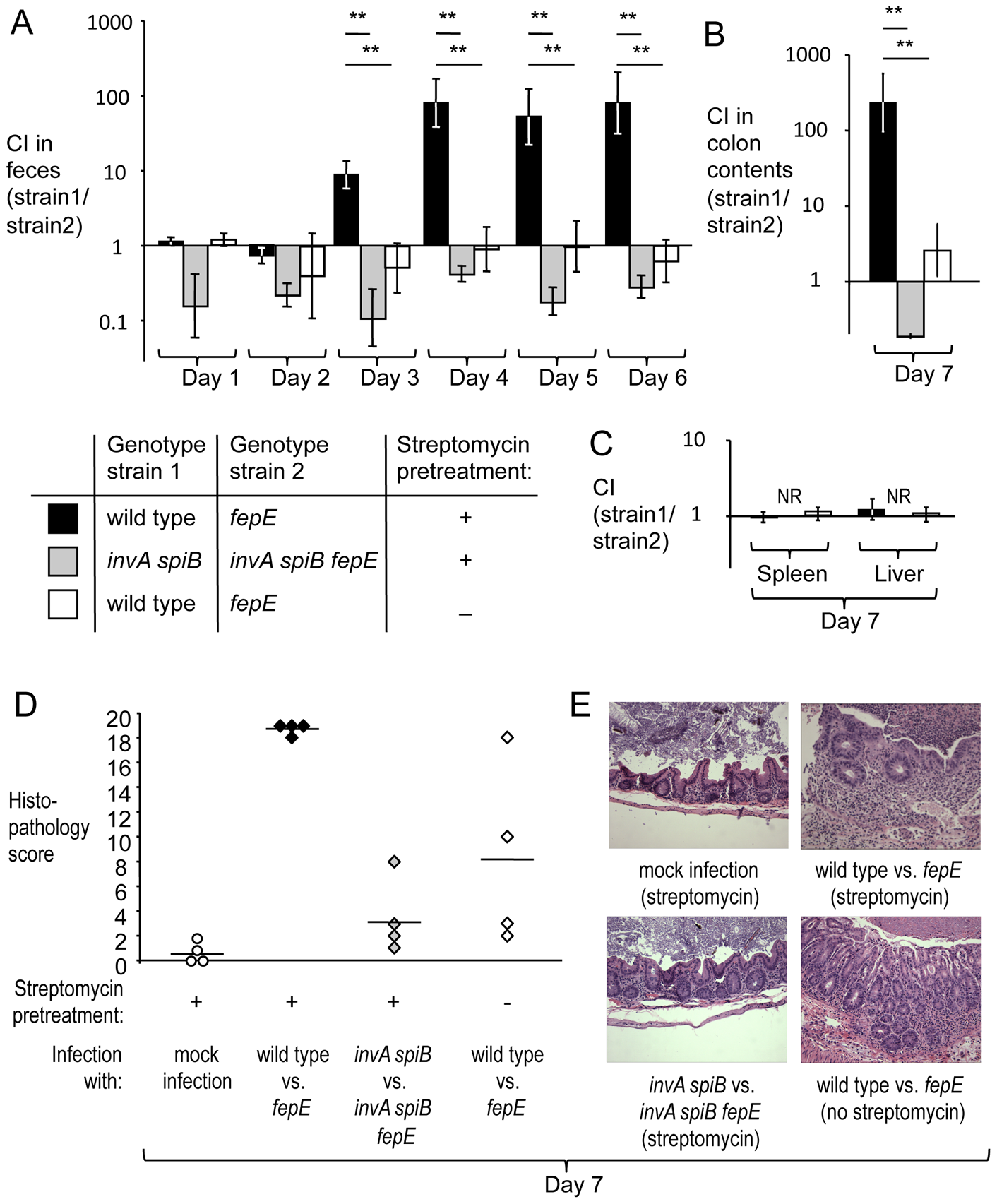 Very long O-antigen chains confer a fitness advantage in the lumen of the inflamed gut.