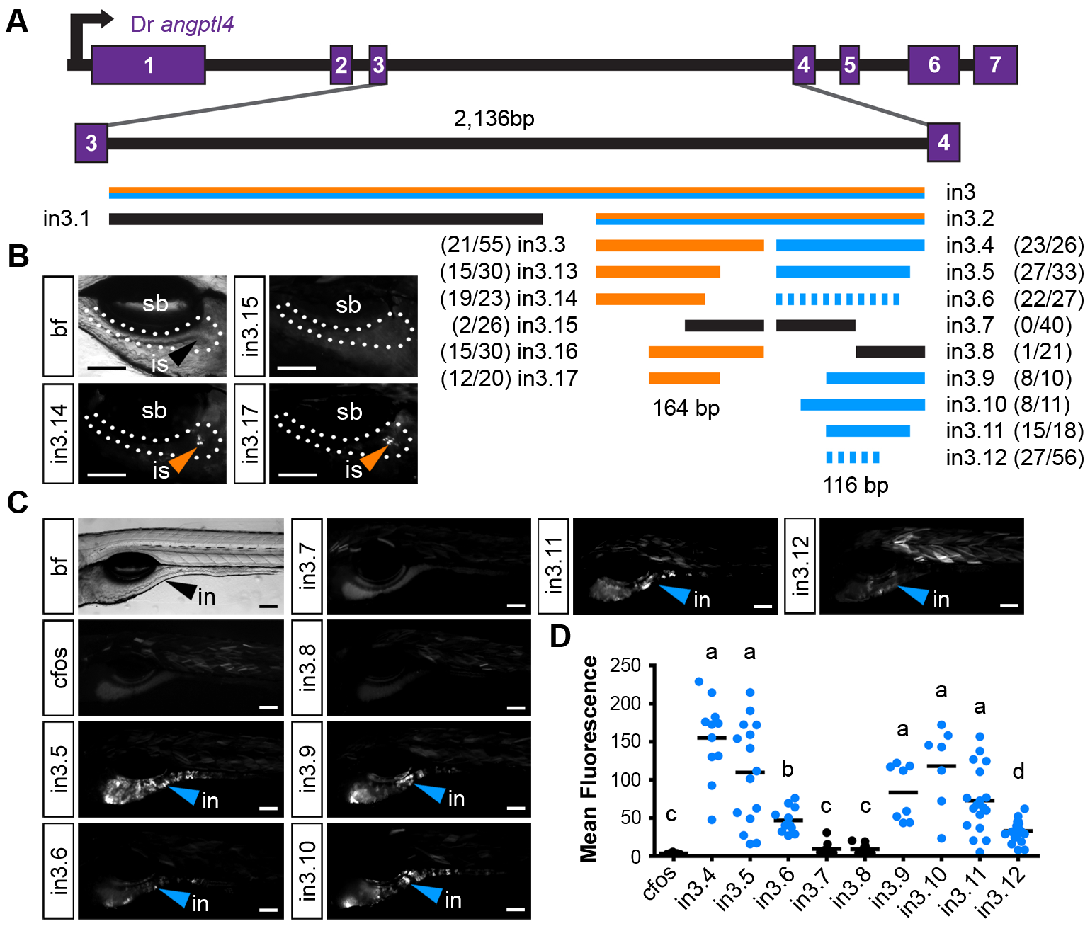Truncation mapping of the islet and intestinal regulatory module.
