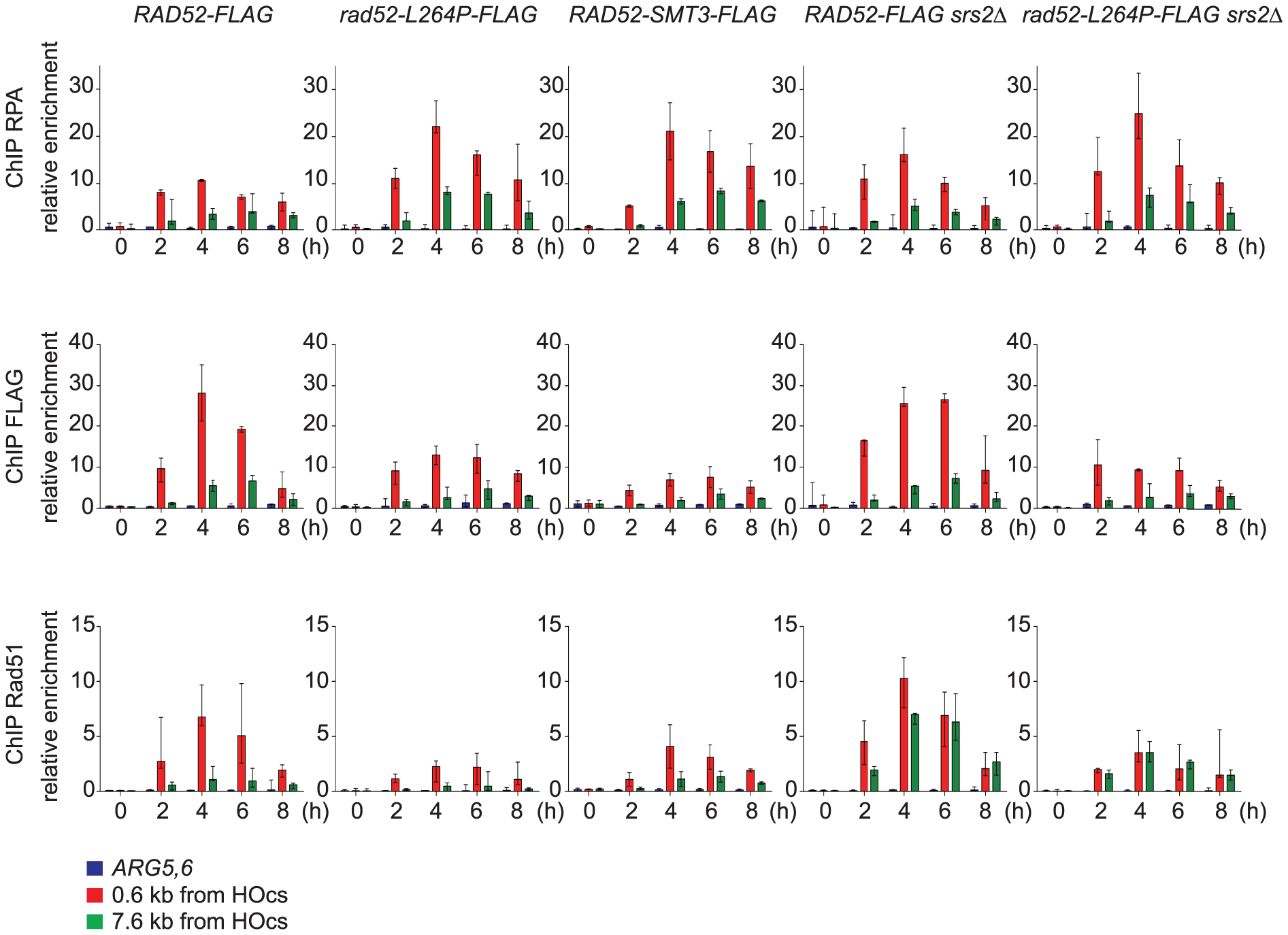 ChIP analysis of Rad51 filament formation at a DSB created by the HO endonuclease in cells that express Rad52-FLAG, Rad52-L264P-FLAG or Rad52-SUMO-FLAG.