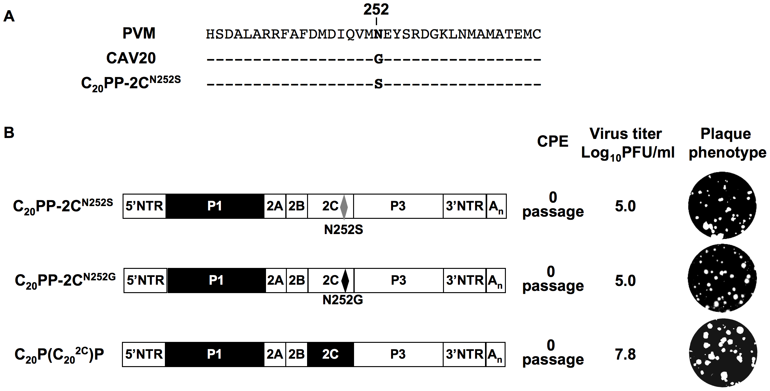 Rescue of the C<sub>20</sub>PP virus by a CAV20-like amino acid or CAV20 2C<sup>ATPase</sup>.