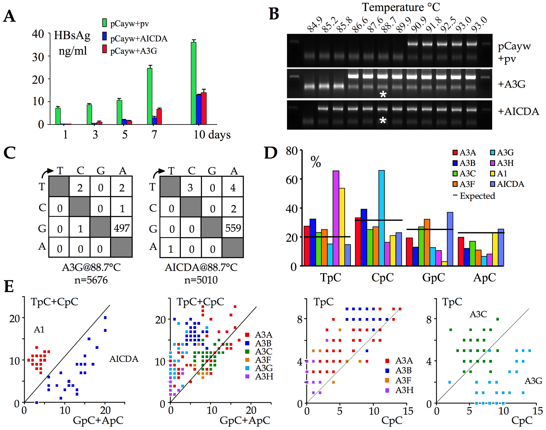 AICDA impacts HBV replication by hyperediting the genome.