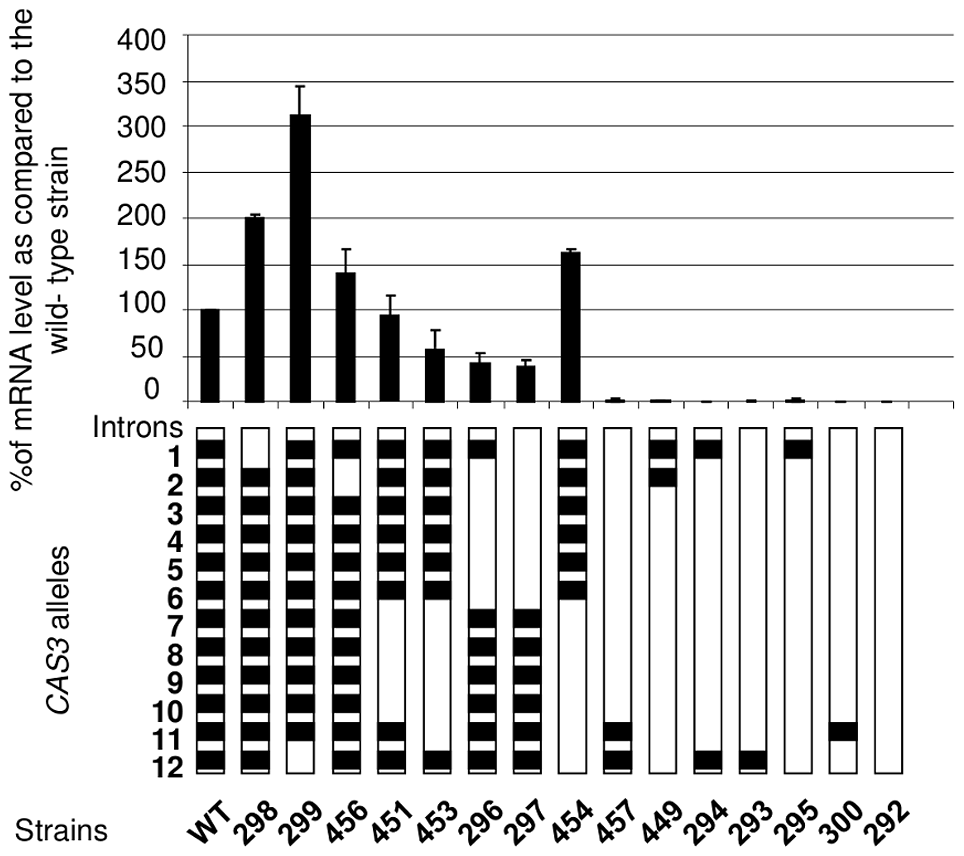Intron number and position influence mRNA level.