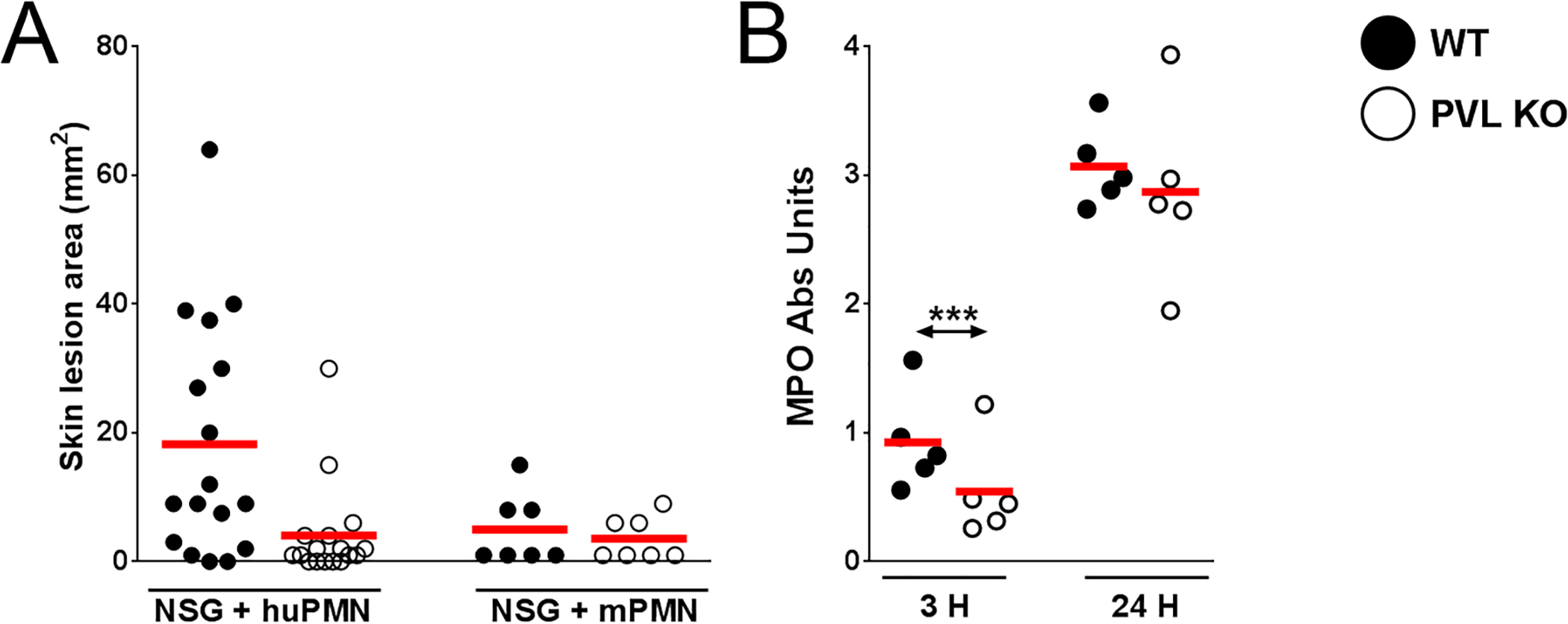 PVL contributes to dermonecrosis in NSG mice adoptively transferred with human PMN.