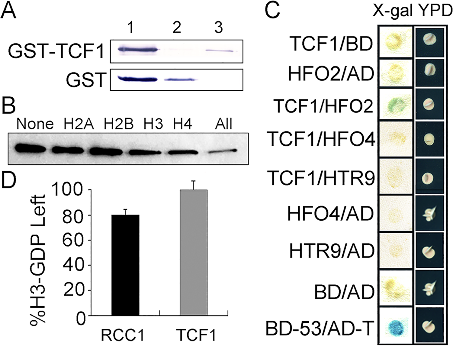 GEF activity assay of TCF1 and analysis of TCF1-histone interactions.