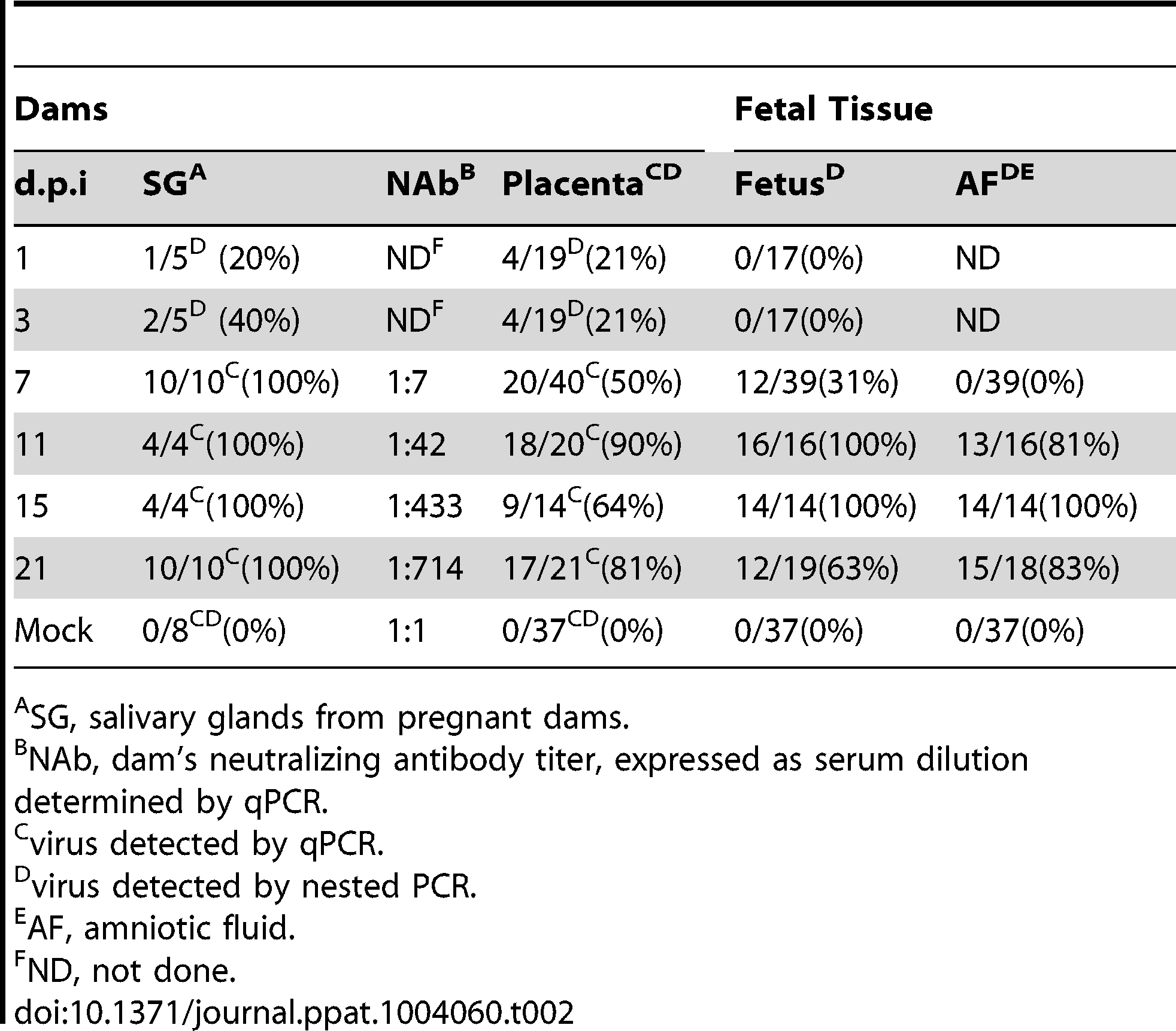 Viral kinetics of GPCMV during congenital infection.