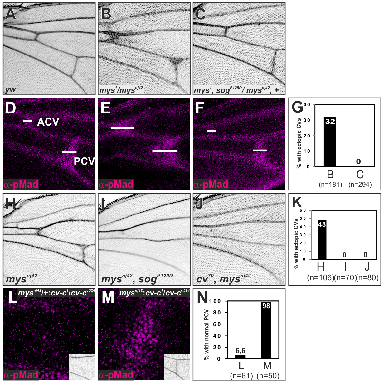 ß-integrin links Sog-Cv-dependent BMP signaling and PCV morphogenesis.