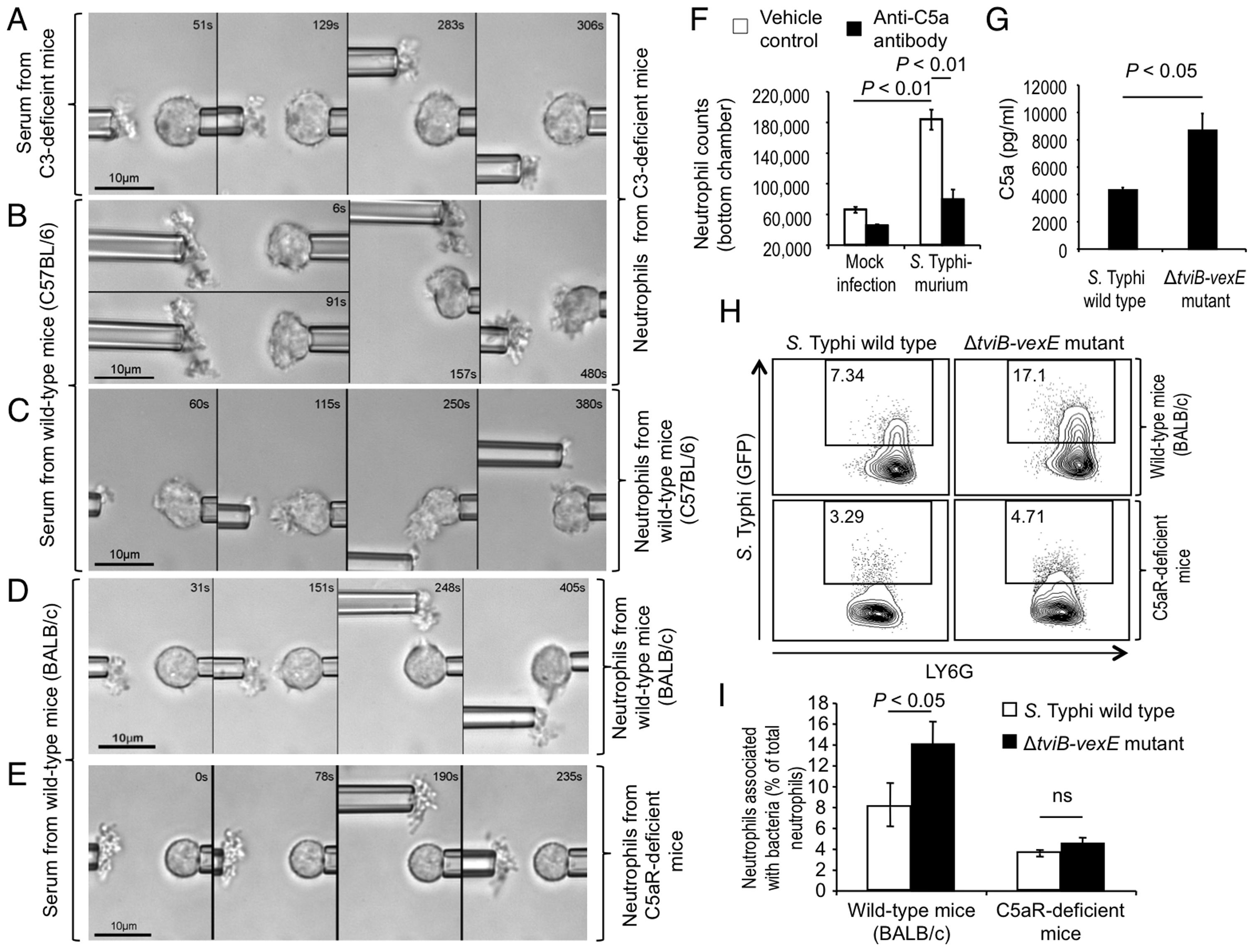 The Vi capsular polysaccharide inhibits chemotactic responses of murine neutrophils <i>in vitro</i> and <i>in vivo</i>.