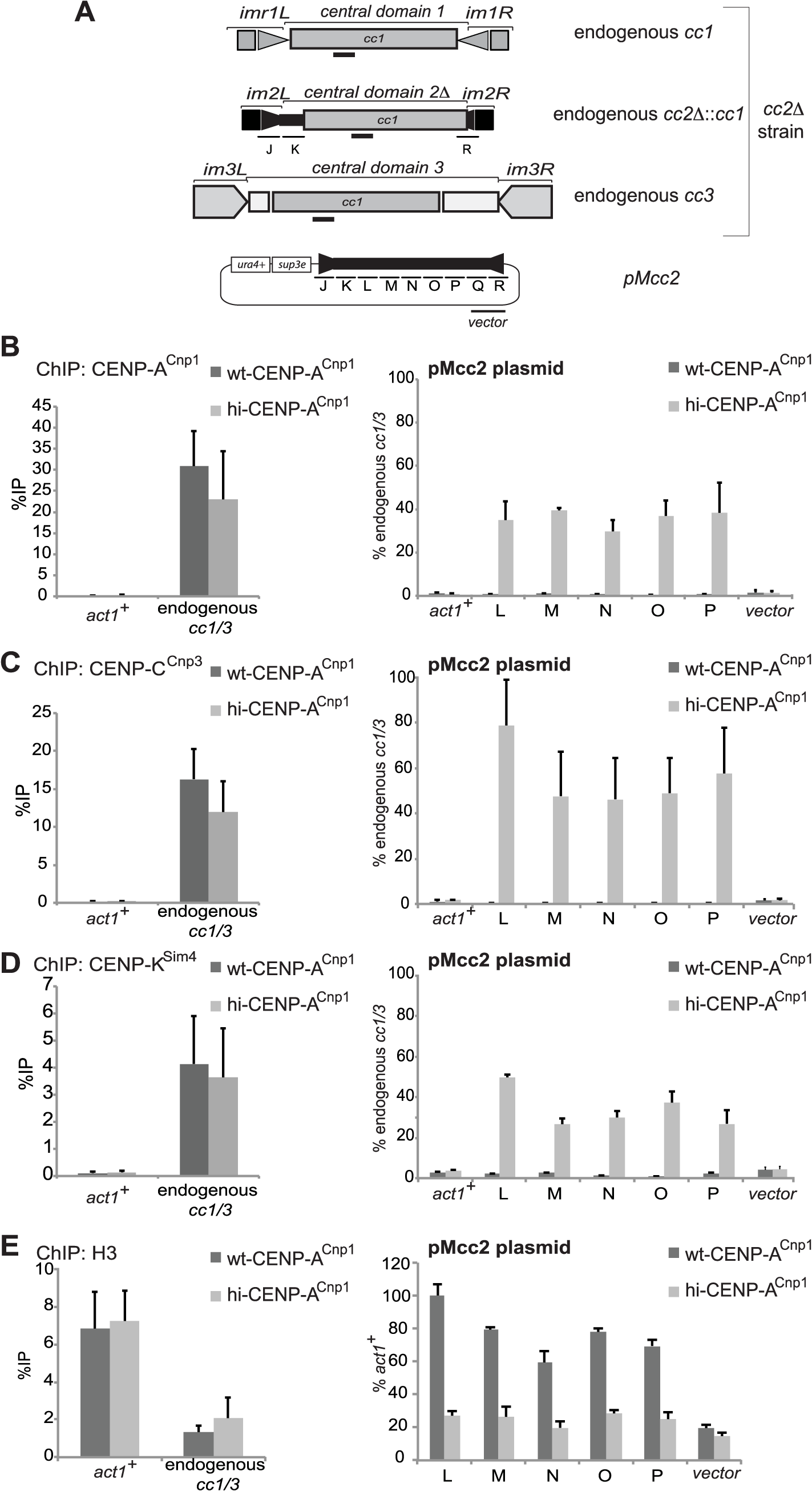 Elevated levels of CENP-A<sup>Cnp1</sup> are sufficient to establish centromeric chromatin in the absence of heterochromatin.