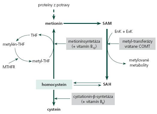Schématické znázornenie metabolizmu homocysteínu. SAM – S-adenozylmetionín, SAH – S-adenozyl-homocysteín, EnK – endogénne komponenty (DNA, RNA, fosfolipidy, melín...), ExK – exogénne komponenty (liečivá, toxíny, fytochemikálie...), COMT – katechol-O-metyltransferáza, THF – tetrahydrofolát, MTHFR – metyléntetrahydrofolátreduktáza