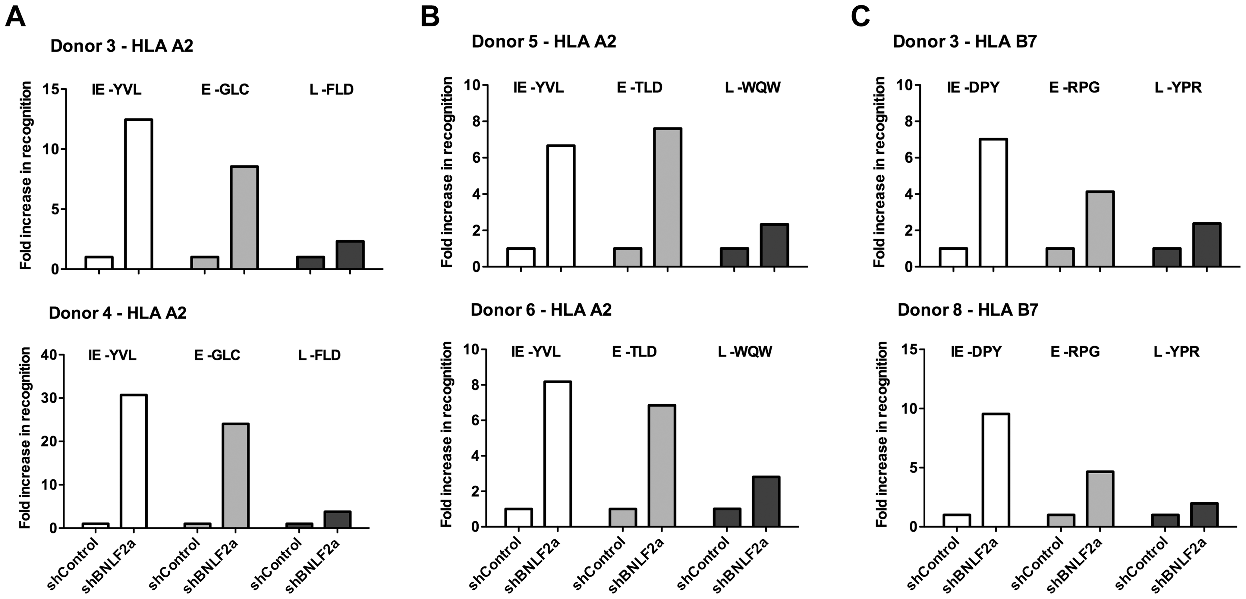 LCLs lacking in BNLF2a expression show increased presentation of epitopes derived from immediate early and early lytic antigens.