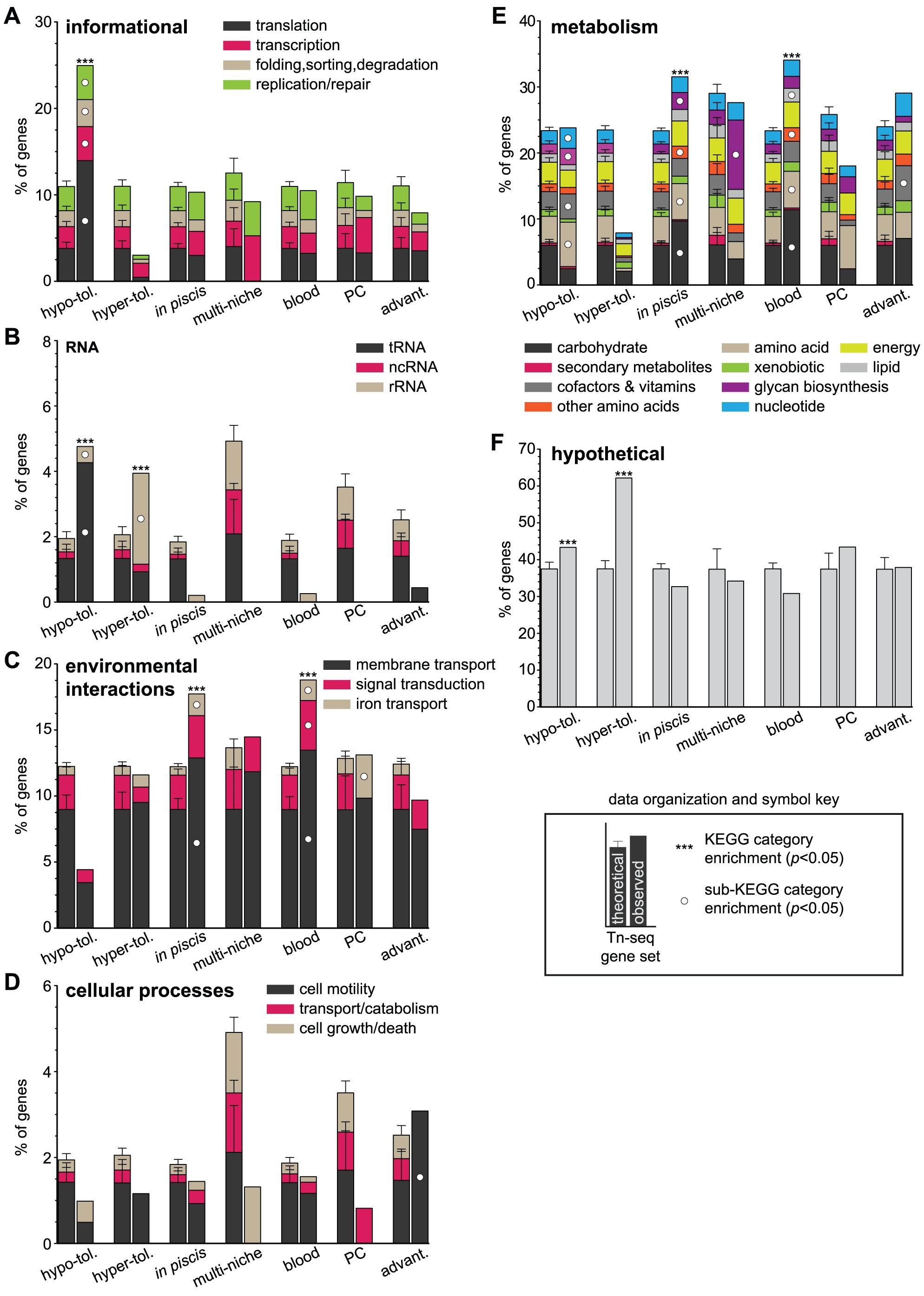 Functional KEGG categories enriched within gene sets.