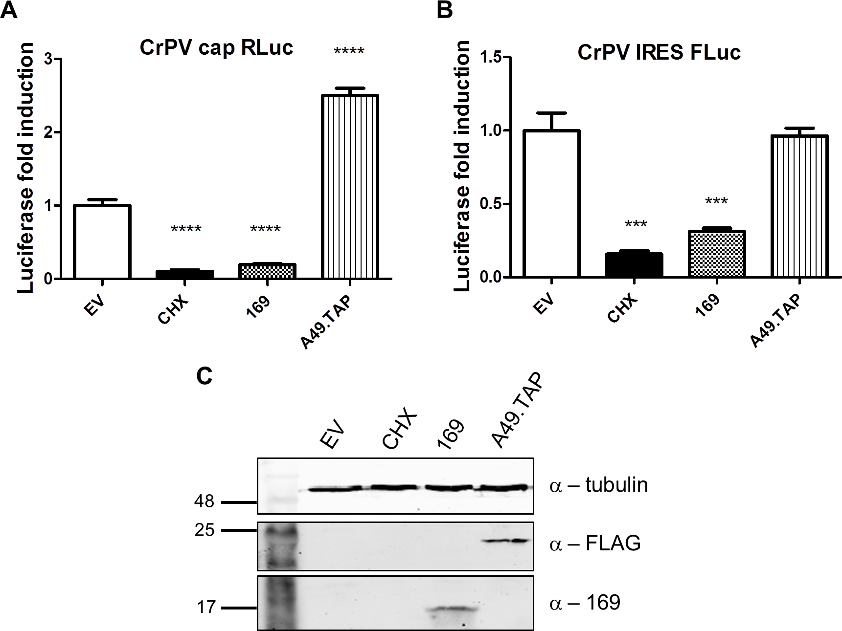 Protein 169 inhibits CrPV IRES-dependent translation.