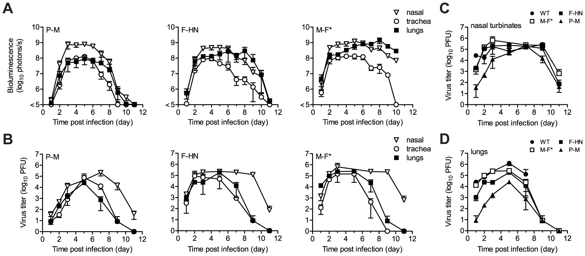 Kinetics of Sendai virus spread and clearance in the respiratory tracts of 129/SvJ mice.
