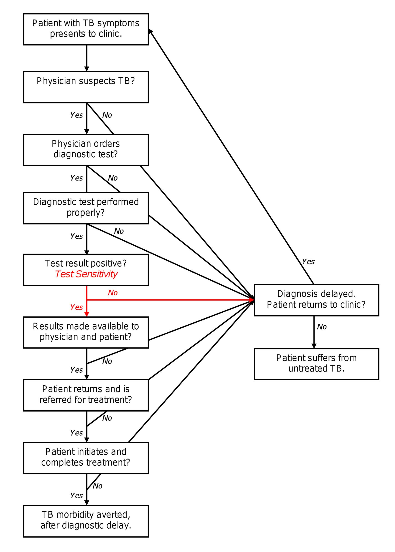 Process of TB diagnosis.