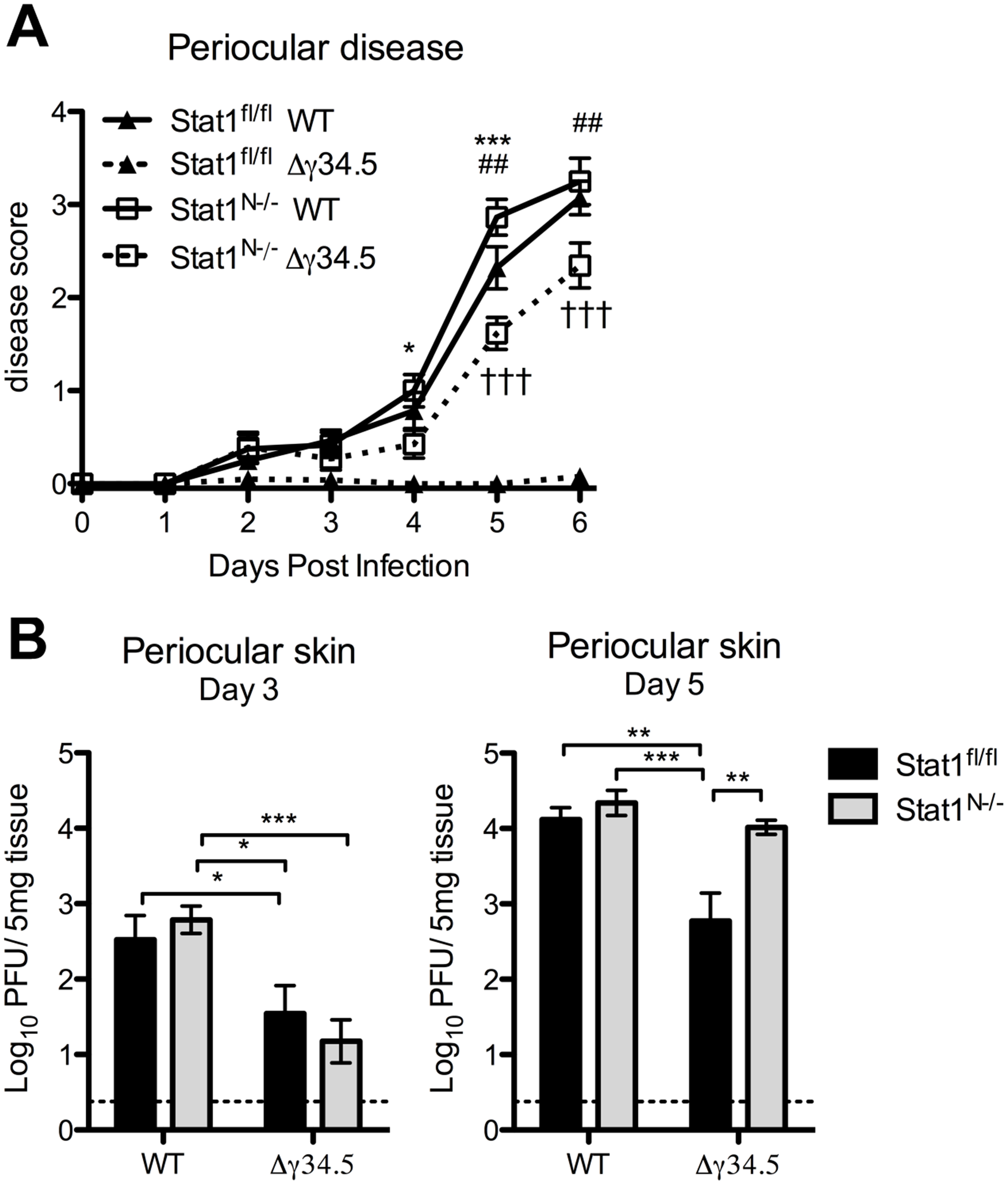 Viral zosteriform spread and pathogenesis in non-neuronal tissues of Stat1<sup>N-/-</sup> mice.