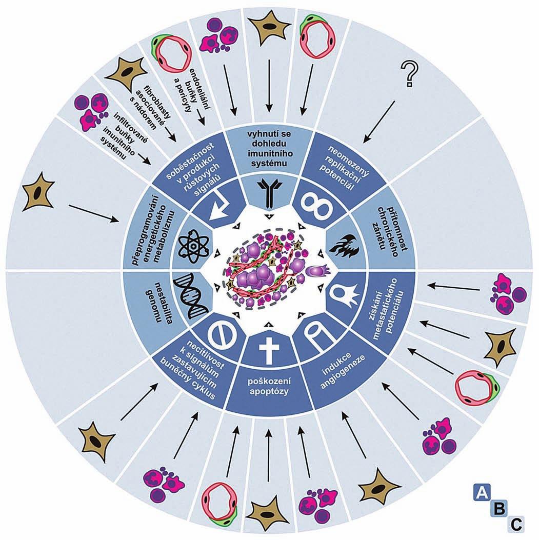 Typické vlastnosti nádorů.