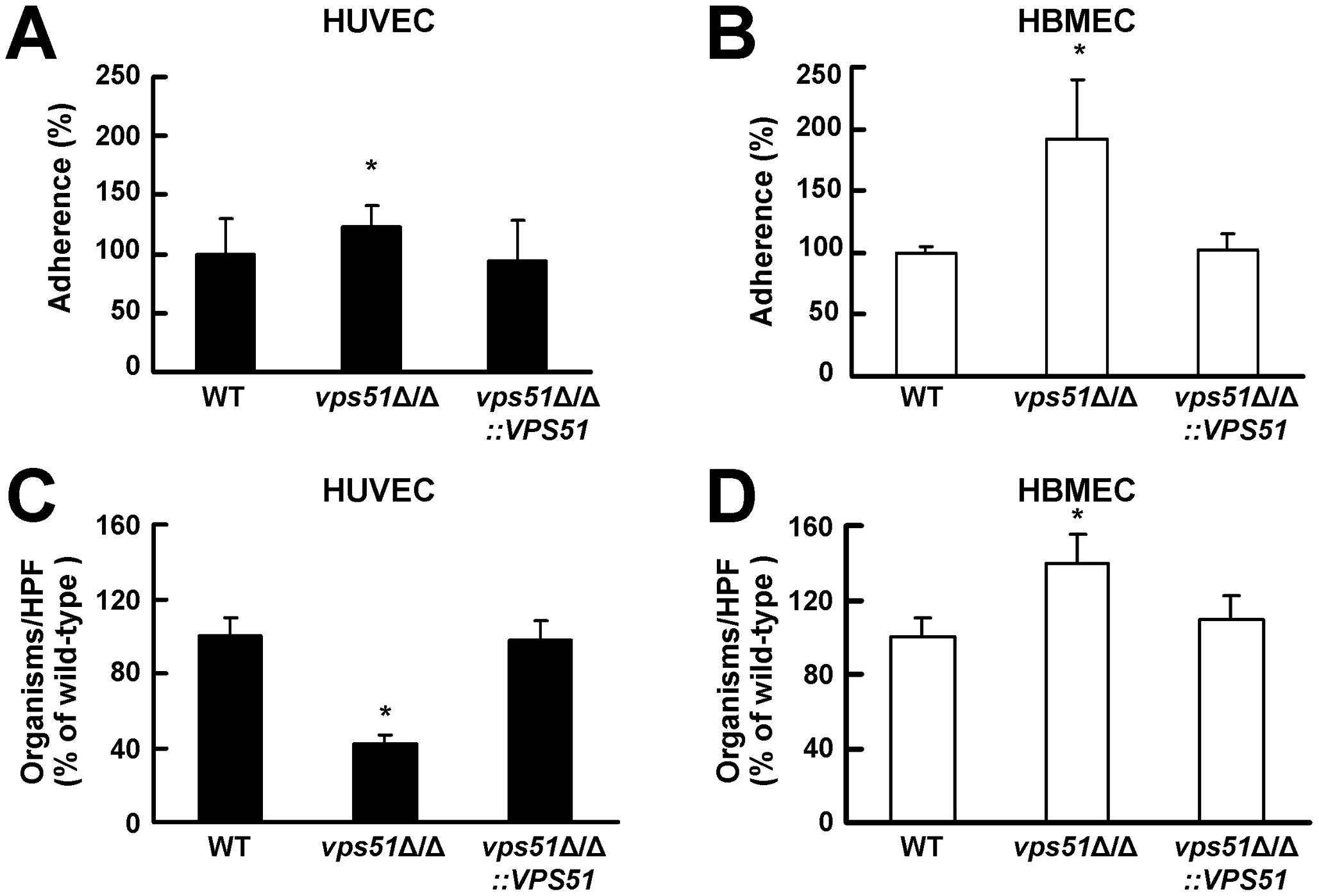 The <i>vps51</i>Δ/Δ mutant interacts differently with human umbilical vein endothelial cells (HUVECs) versus human brain microvascular endothelial cells (HBMECs).