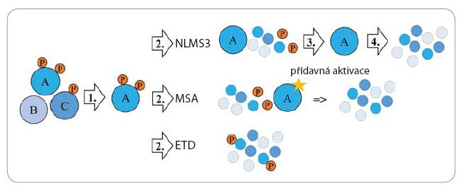 Zjednodušené schéma metod, které se používají pro analýzu fosforylovaných peptidů MS.
