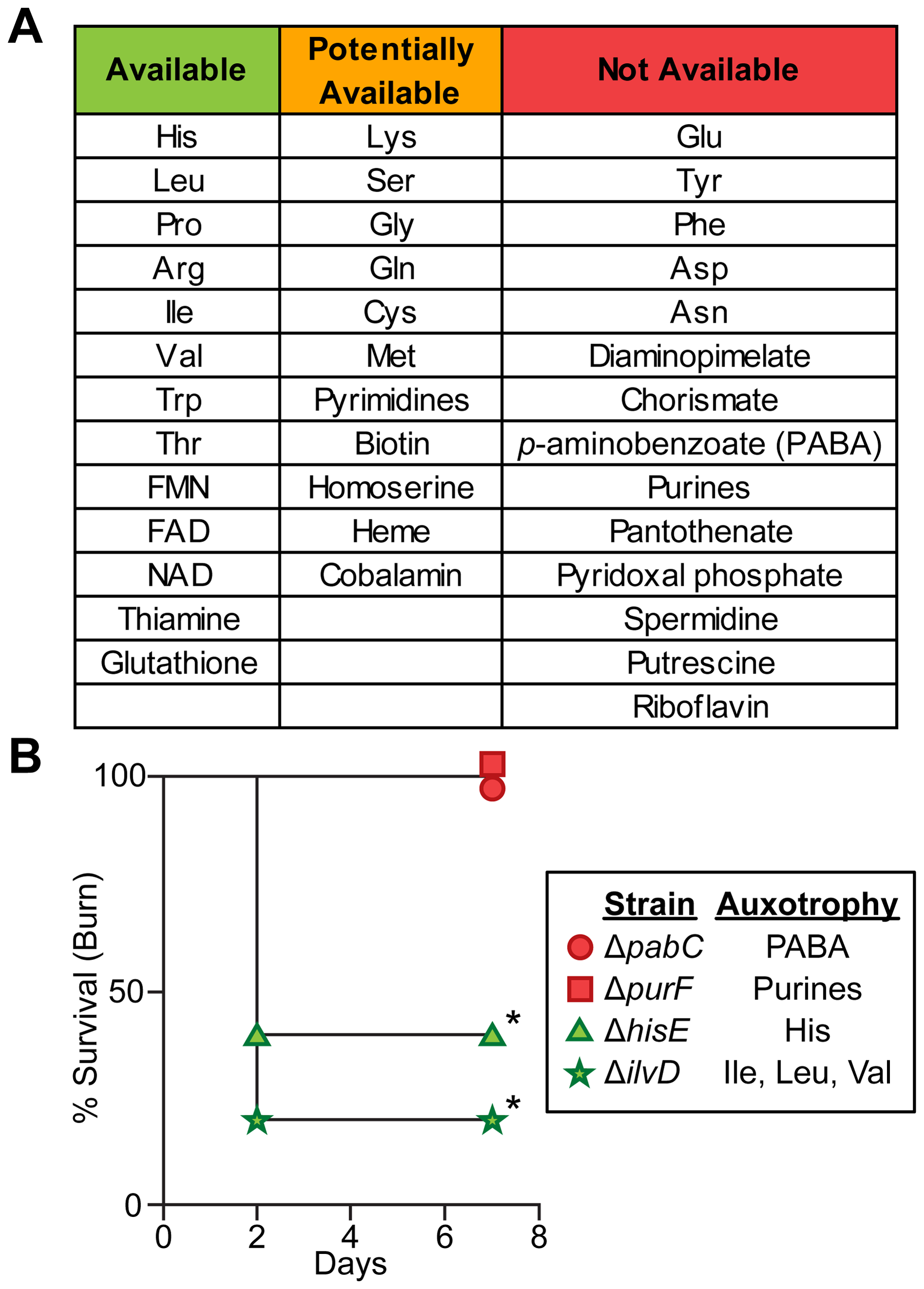 Biosynthetic requirements of <i>P. aeruginosa</i> during wound infection.