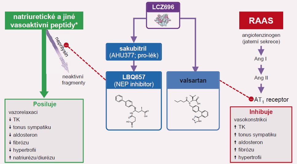 Sakubitril-valsartan (Entresto) inhibuje neprilysil (NEP) a současně blokuje AT<sub>1</sub> receptor.