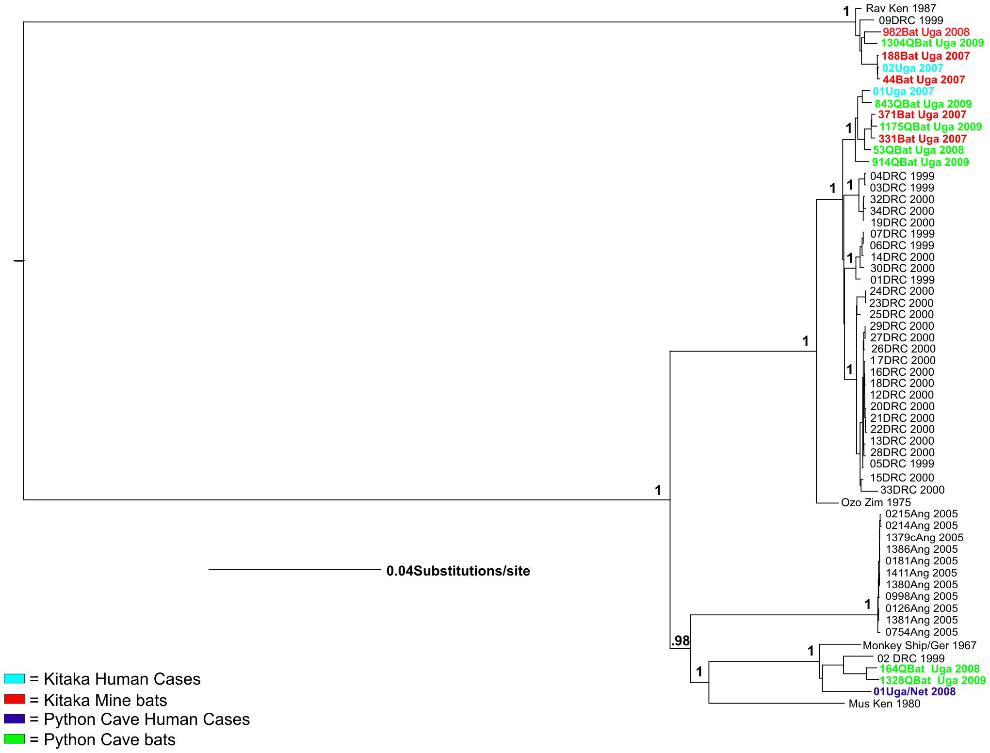 Bayesian phylogeny of full length Marburg genome.