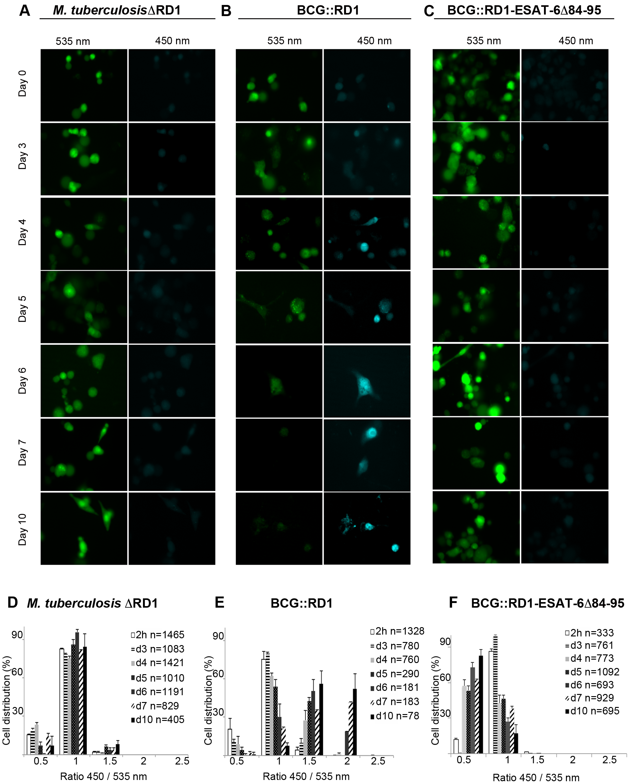 Analysis of ESX-1 deletion-, truncation- and complementation-mutants highlights the link between phagosomal rupture and functional ESX-1 secretion.