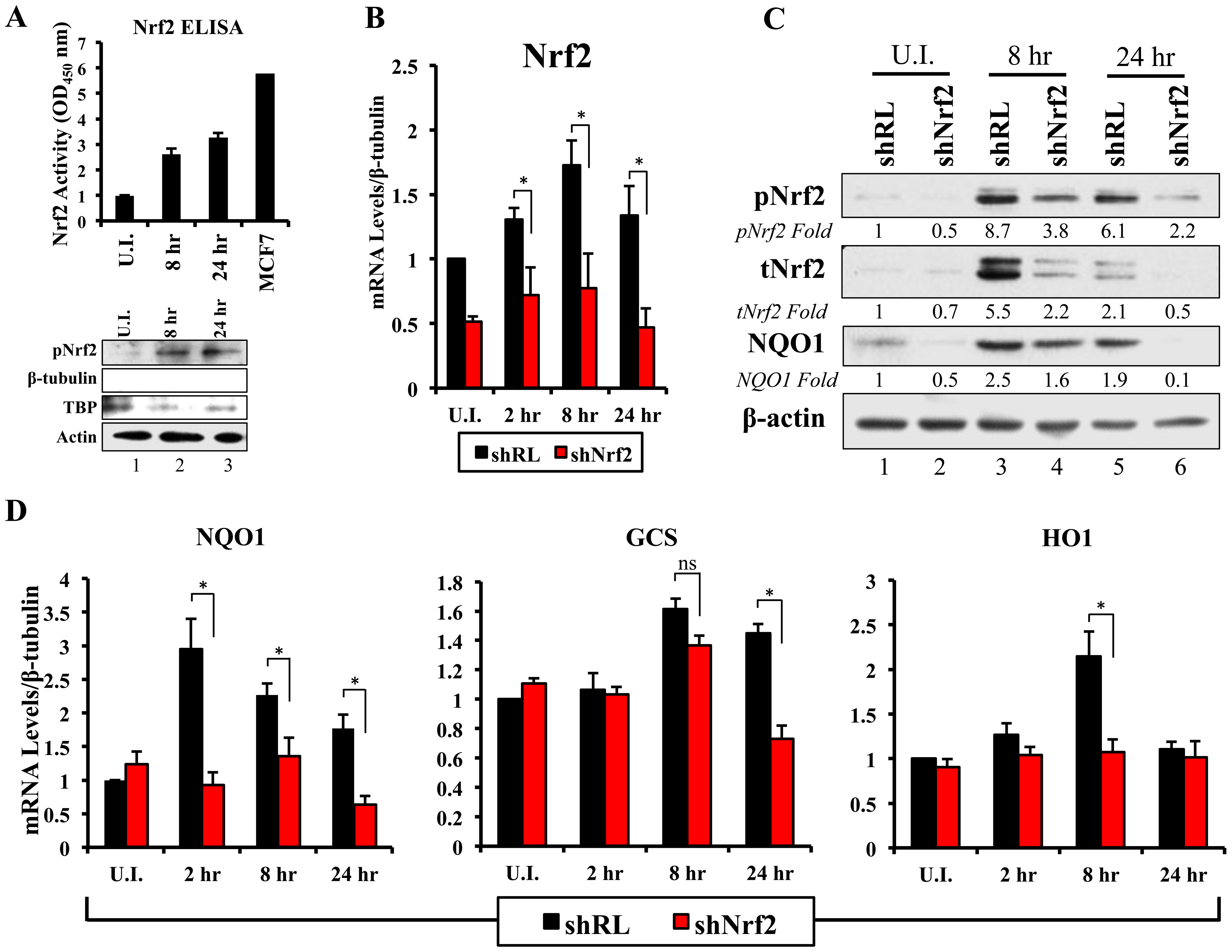 Lentiviral knockdown of Nrf2 and the effects on target genes during KSHV infection.