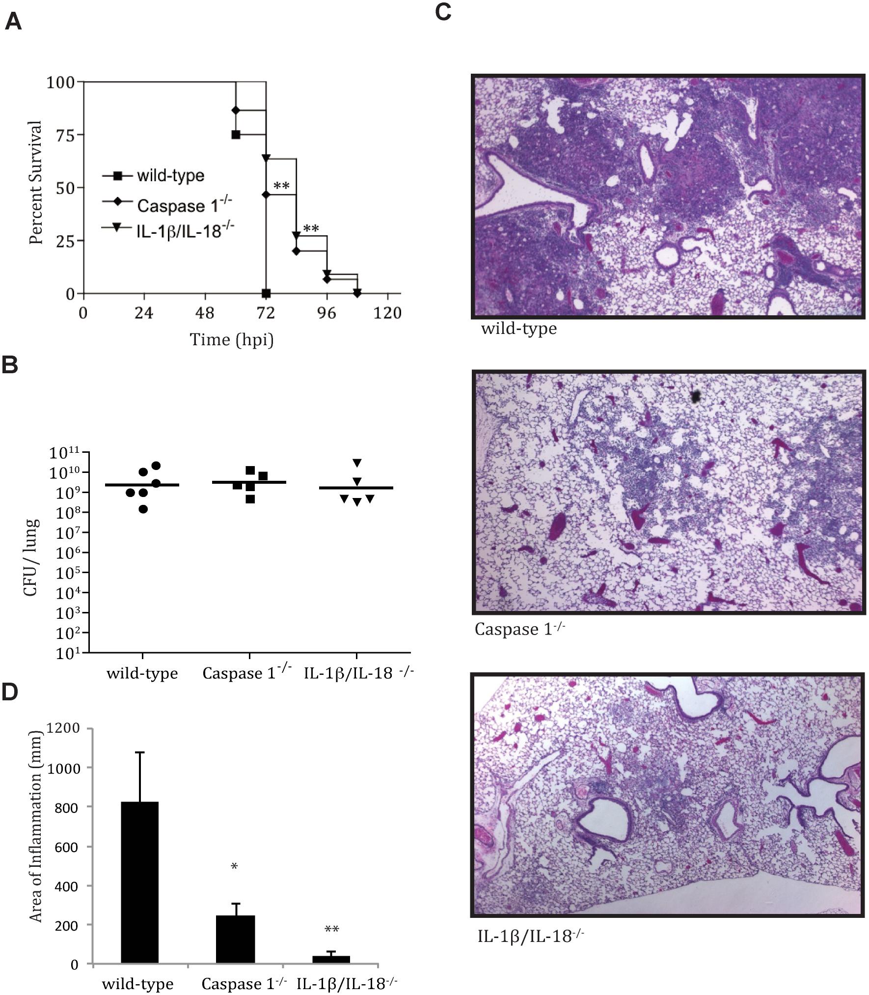 IL-1β/IL-18 cytokine activation contributes to pathology of pneumonic plague.