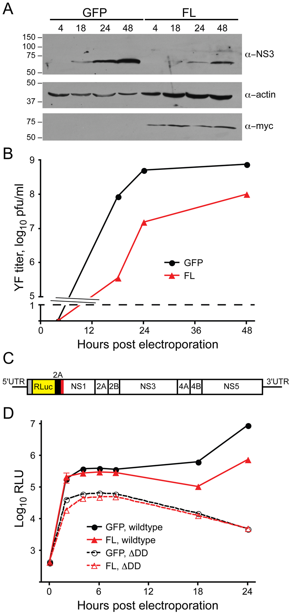 DNAJC14 inhibits a post entry step.