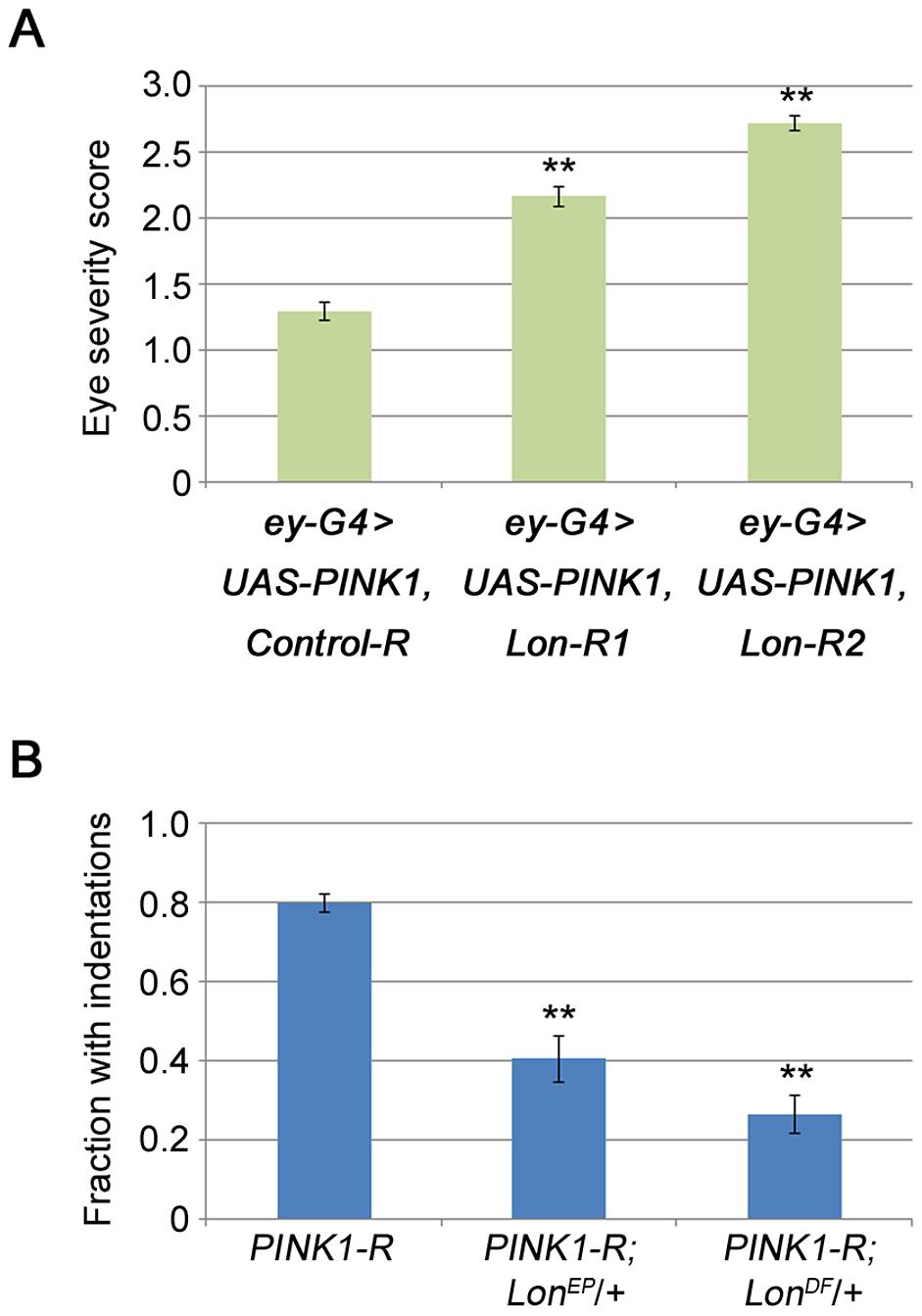 Lon deficiency stimulates PINK1 activity <i>in vivo</i>.